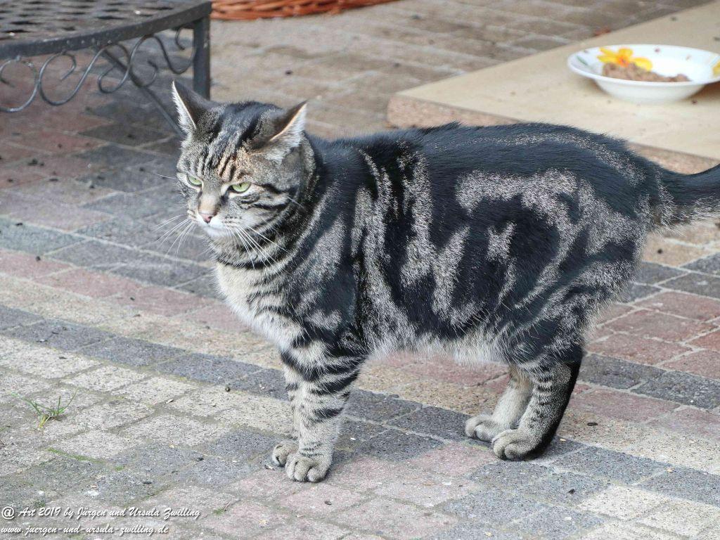 Katze Mimi im Januar 2019