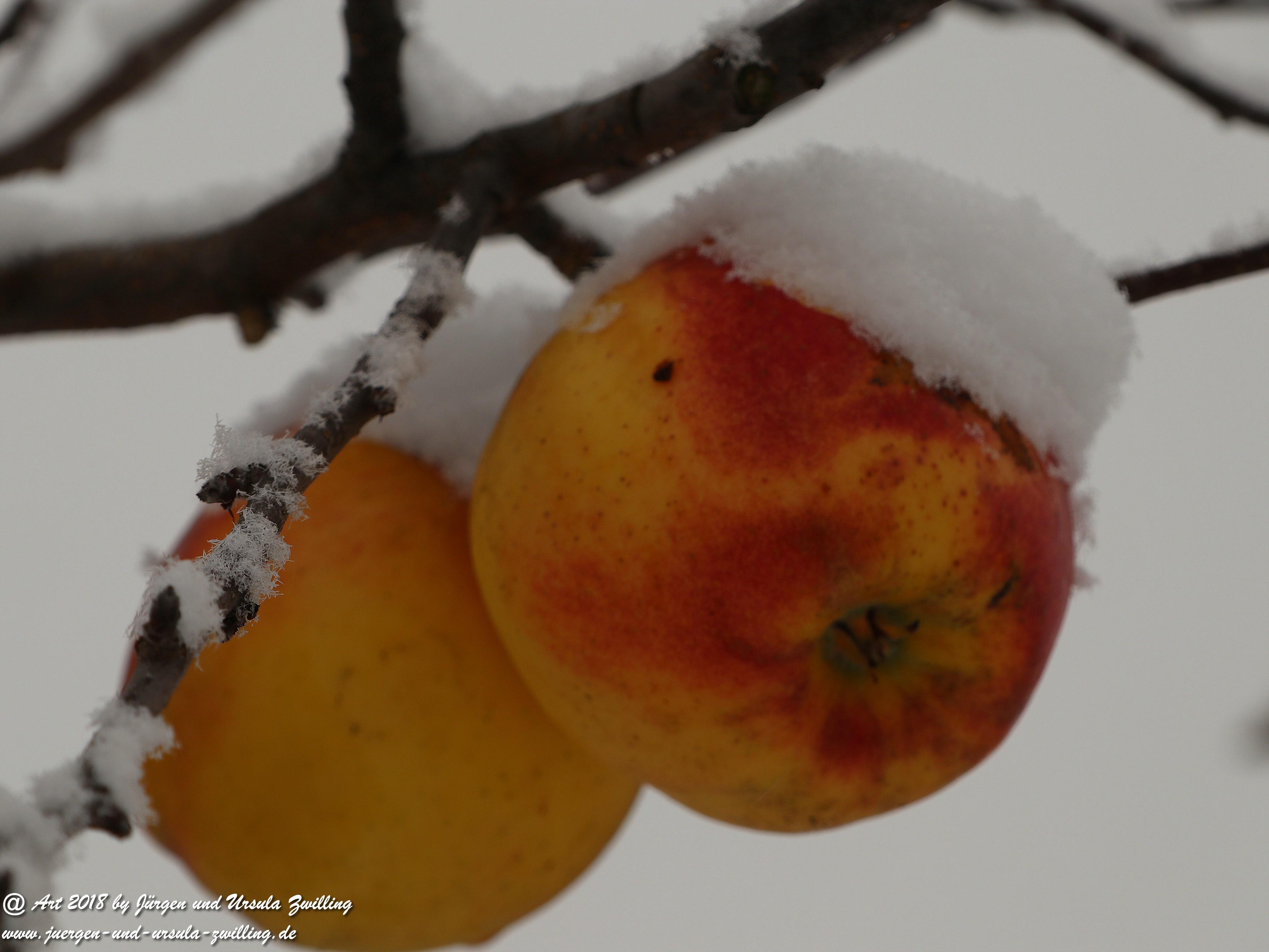 Winterapfel 2