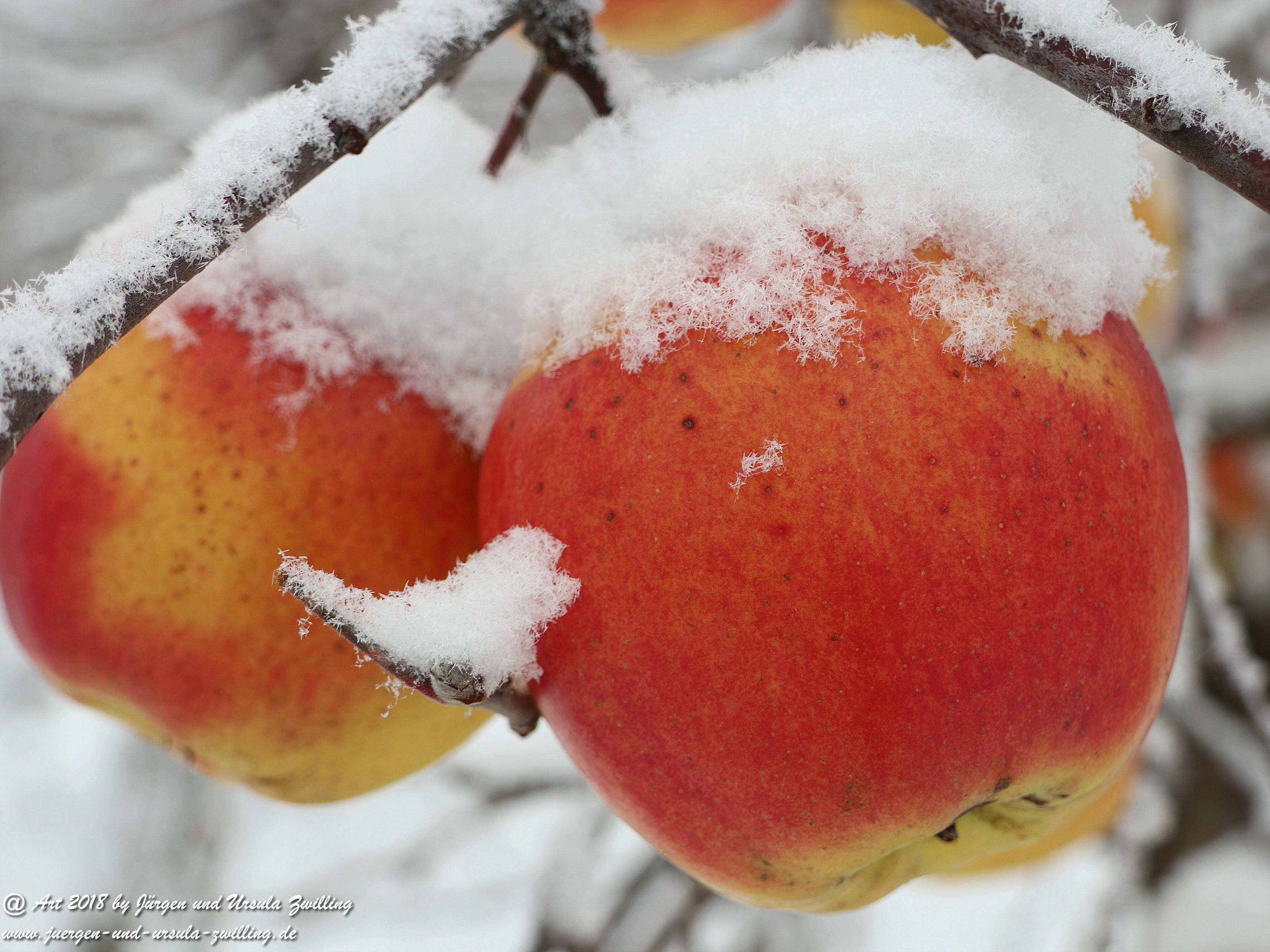 Winterapfel 6