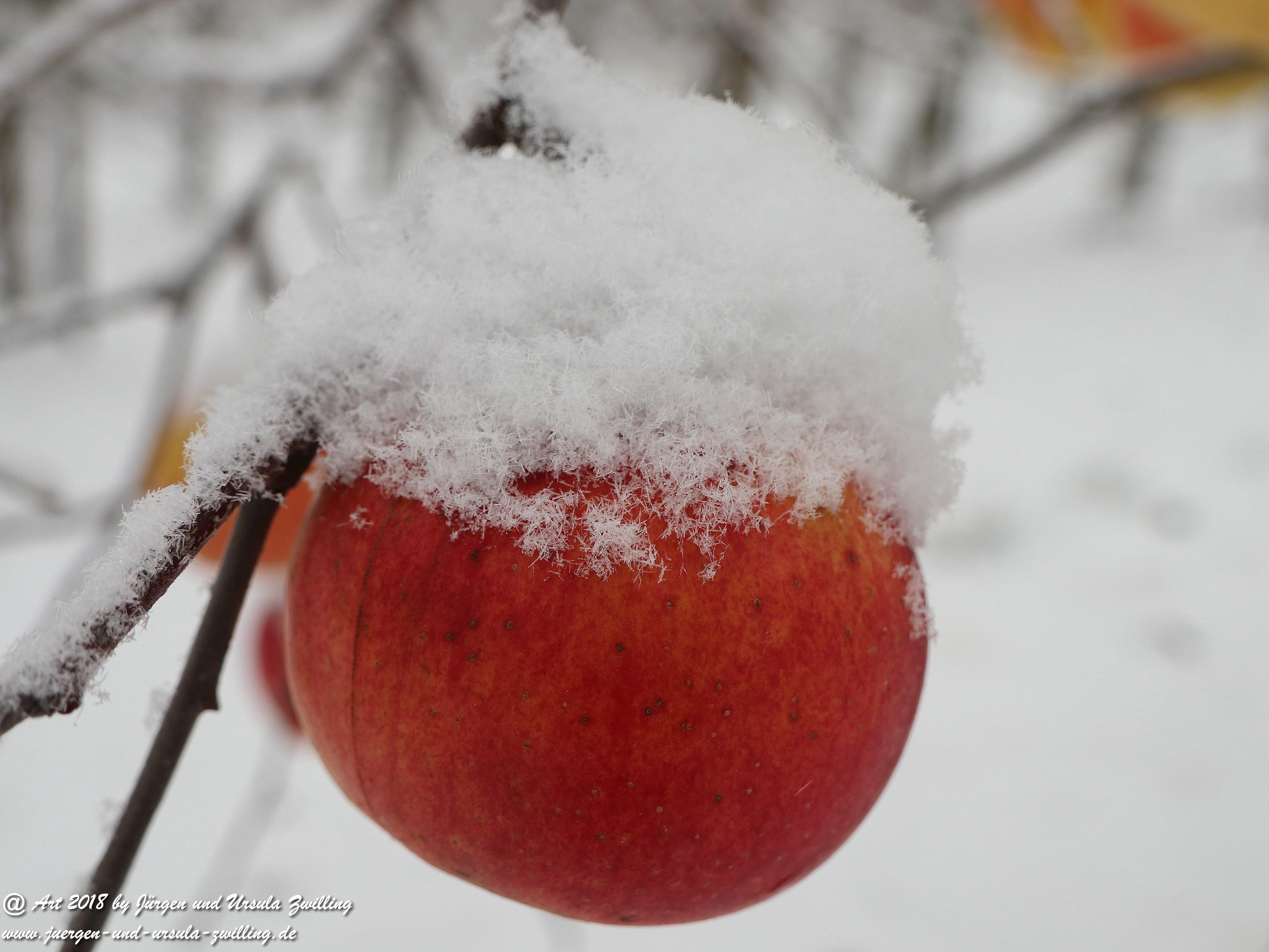 Winterapfel 8