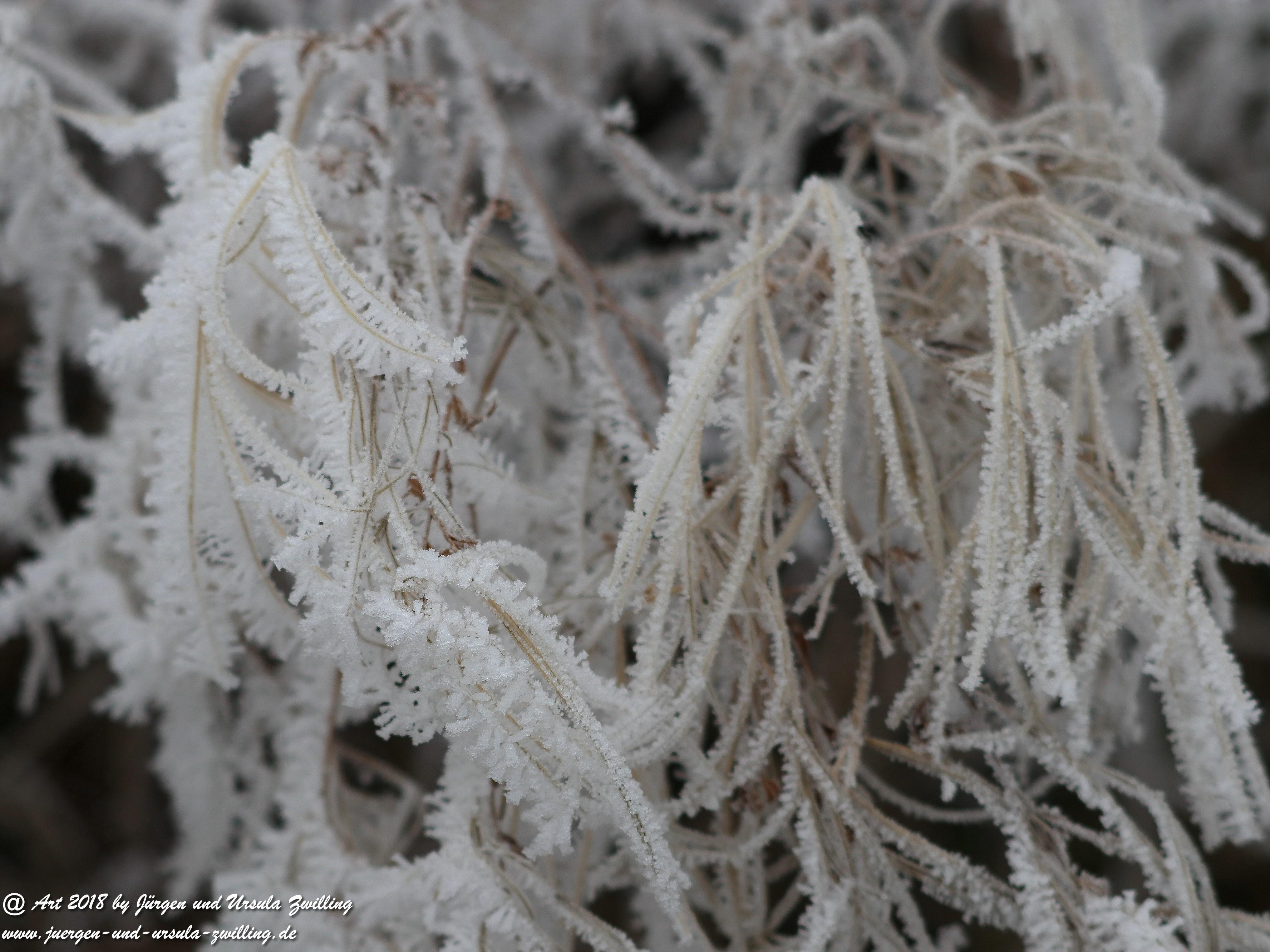 Froststrauch 2
