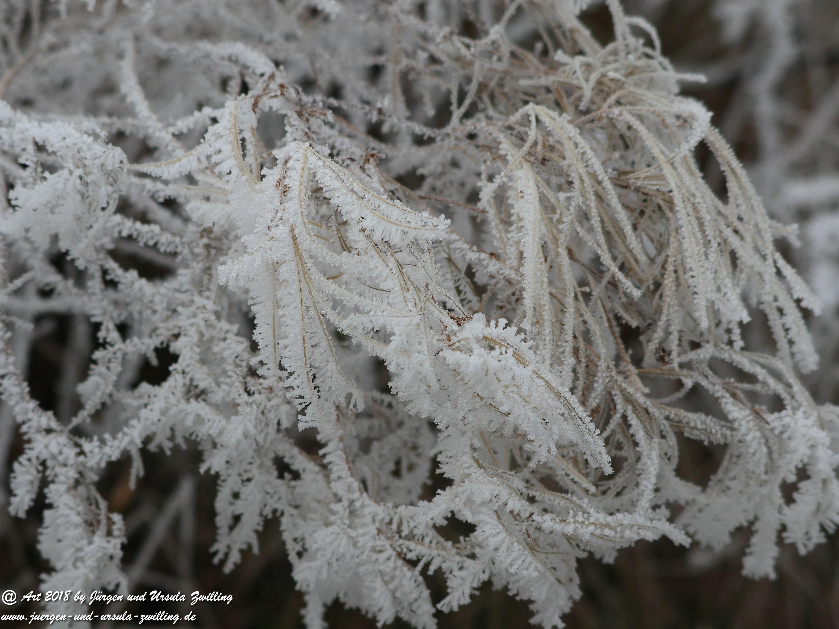 Froststrauch 3