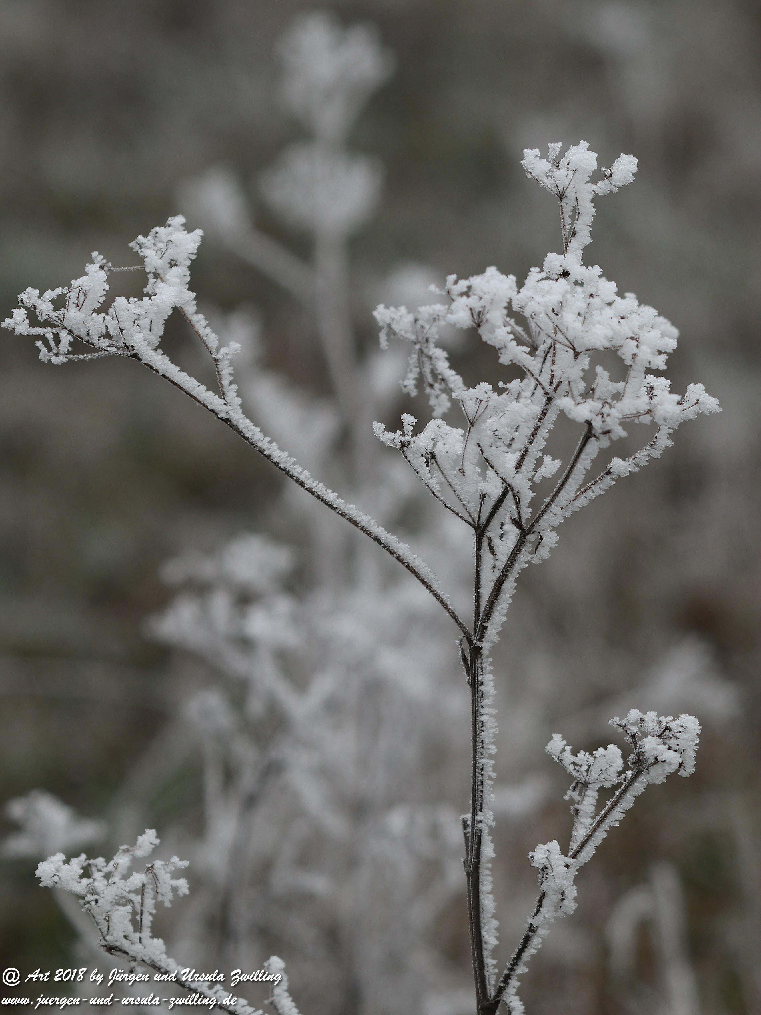 Winterblume 1