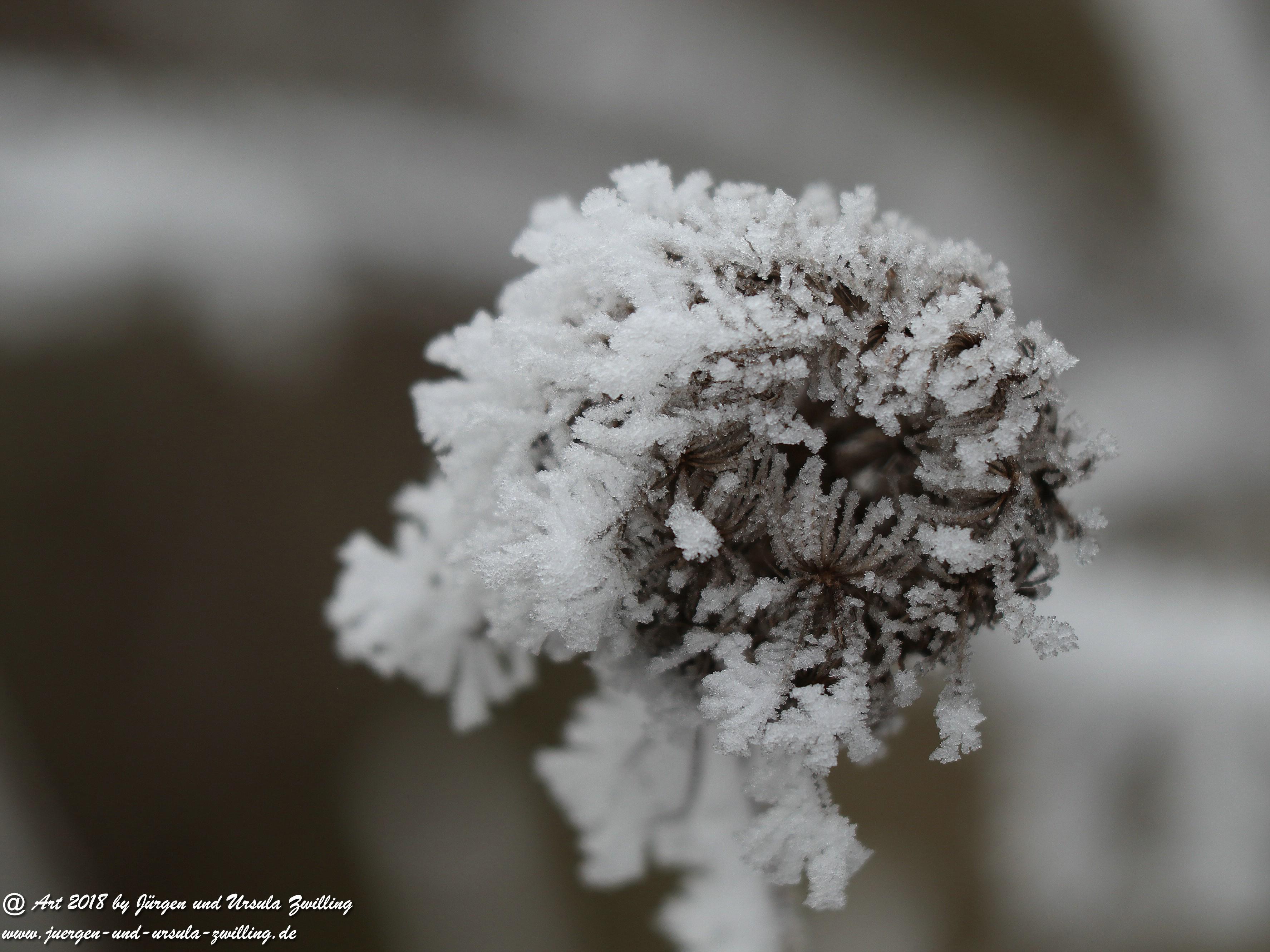 Winterblume 2