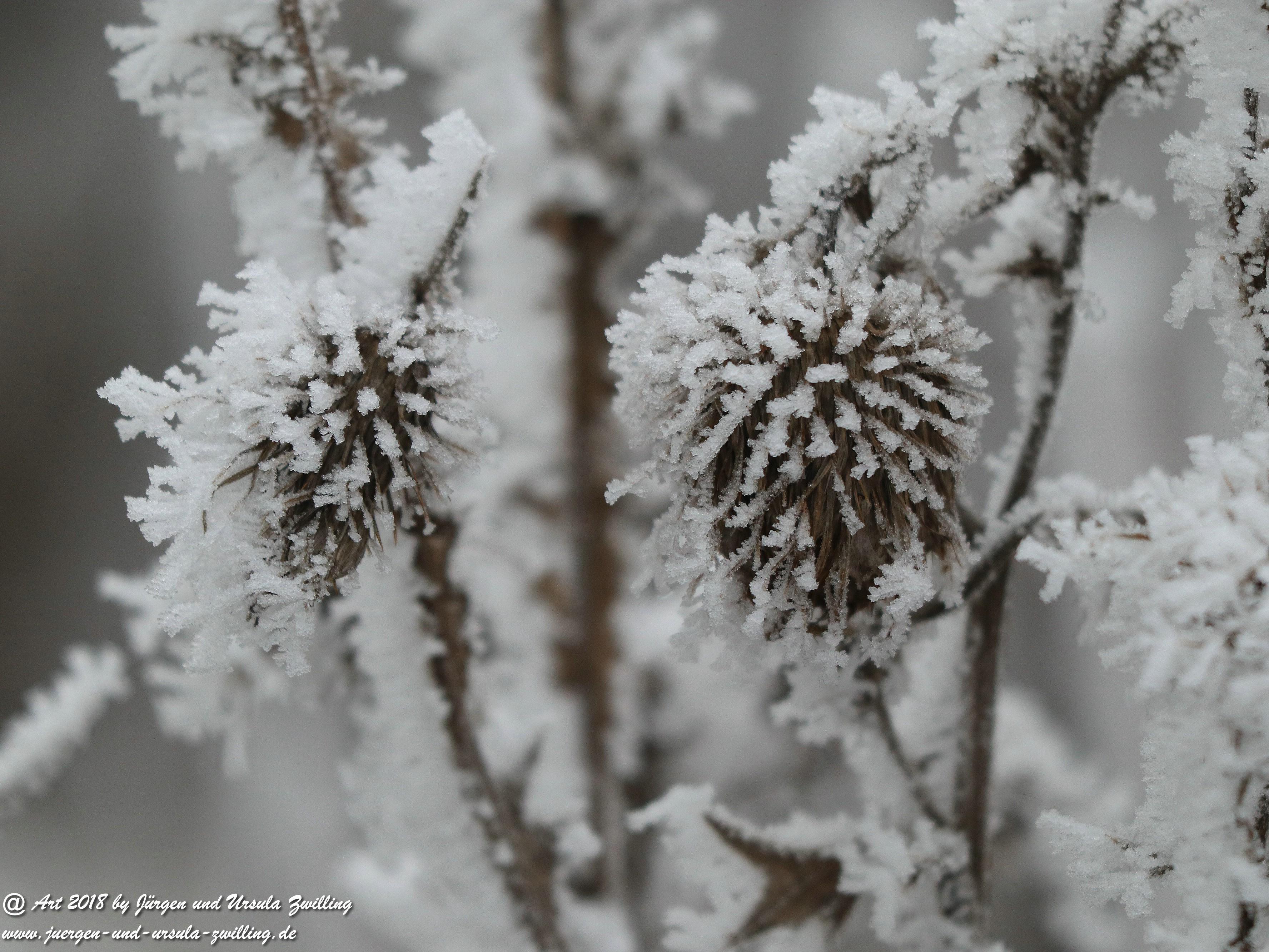 Winterblume 3