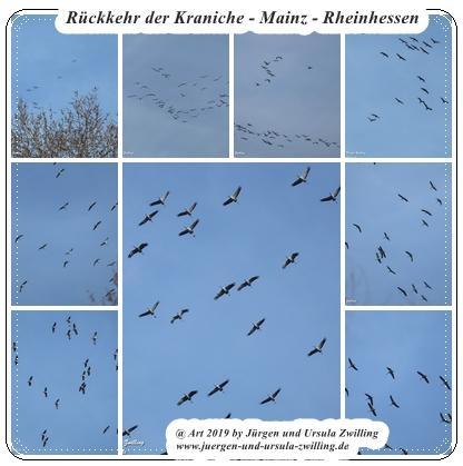 Rückkehr der Kraniche - Mainz - Rheinhessen