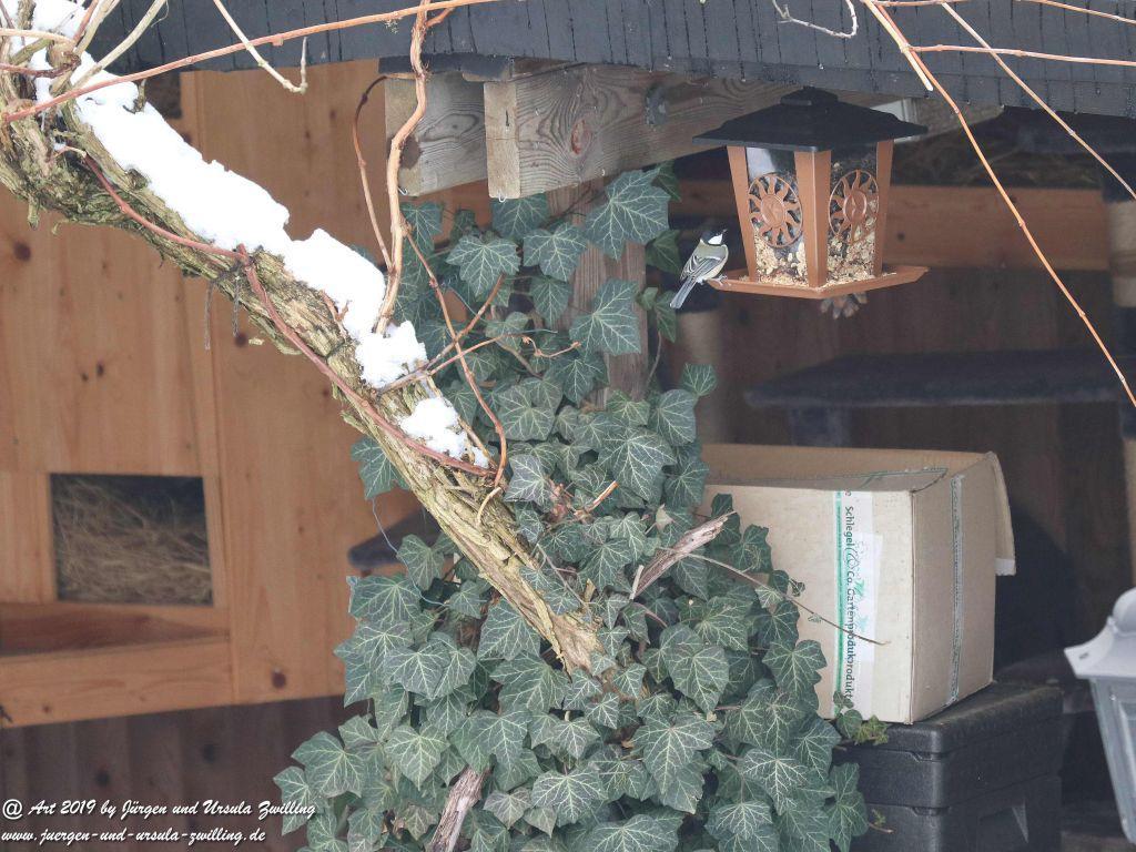 Meisen  aktiv am Vogelfutter