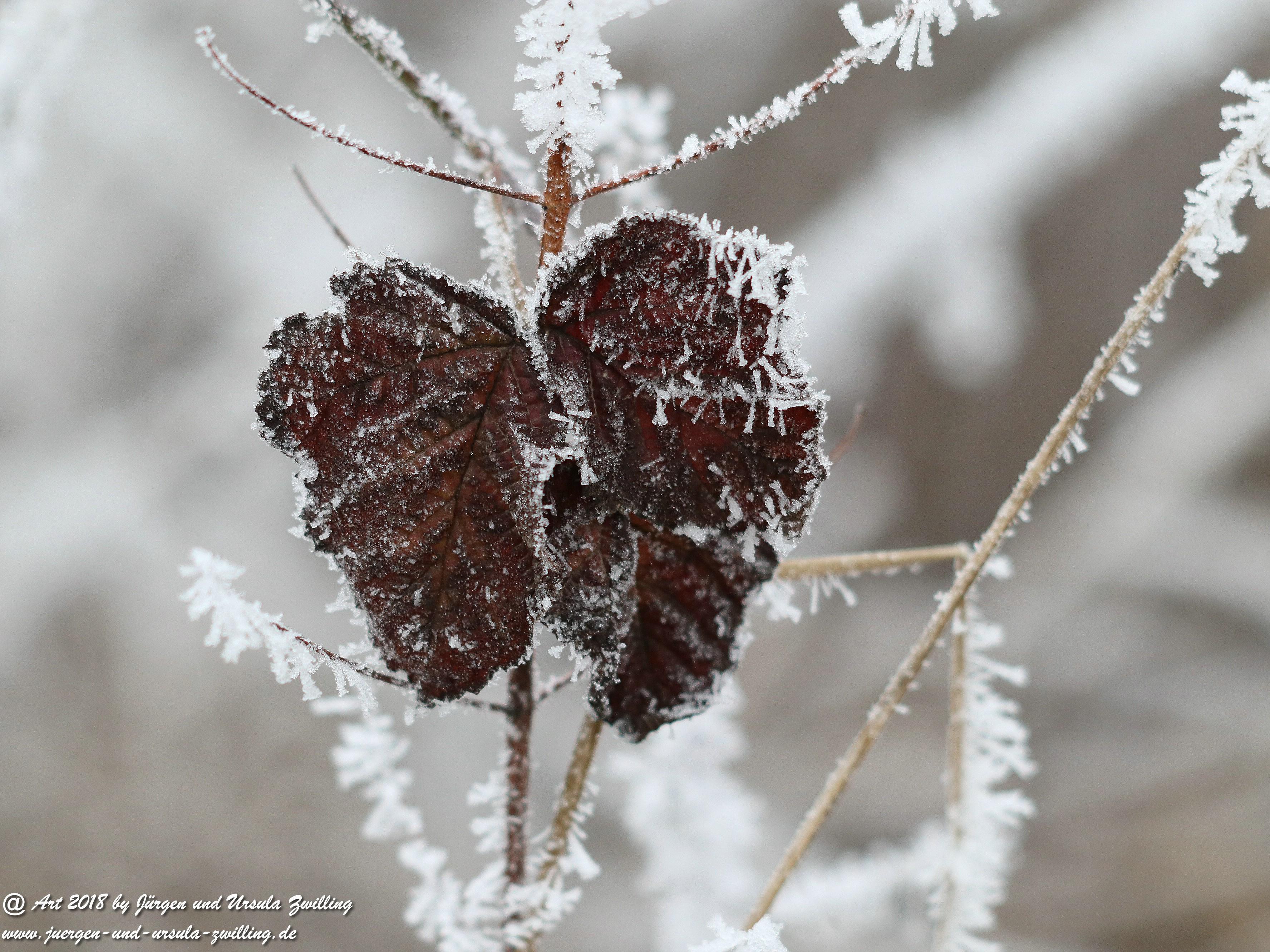 Frostblatt 1