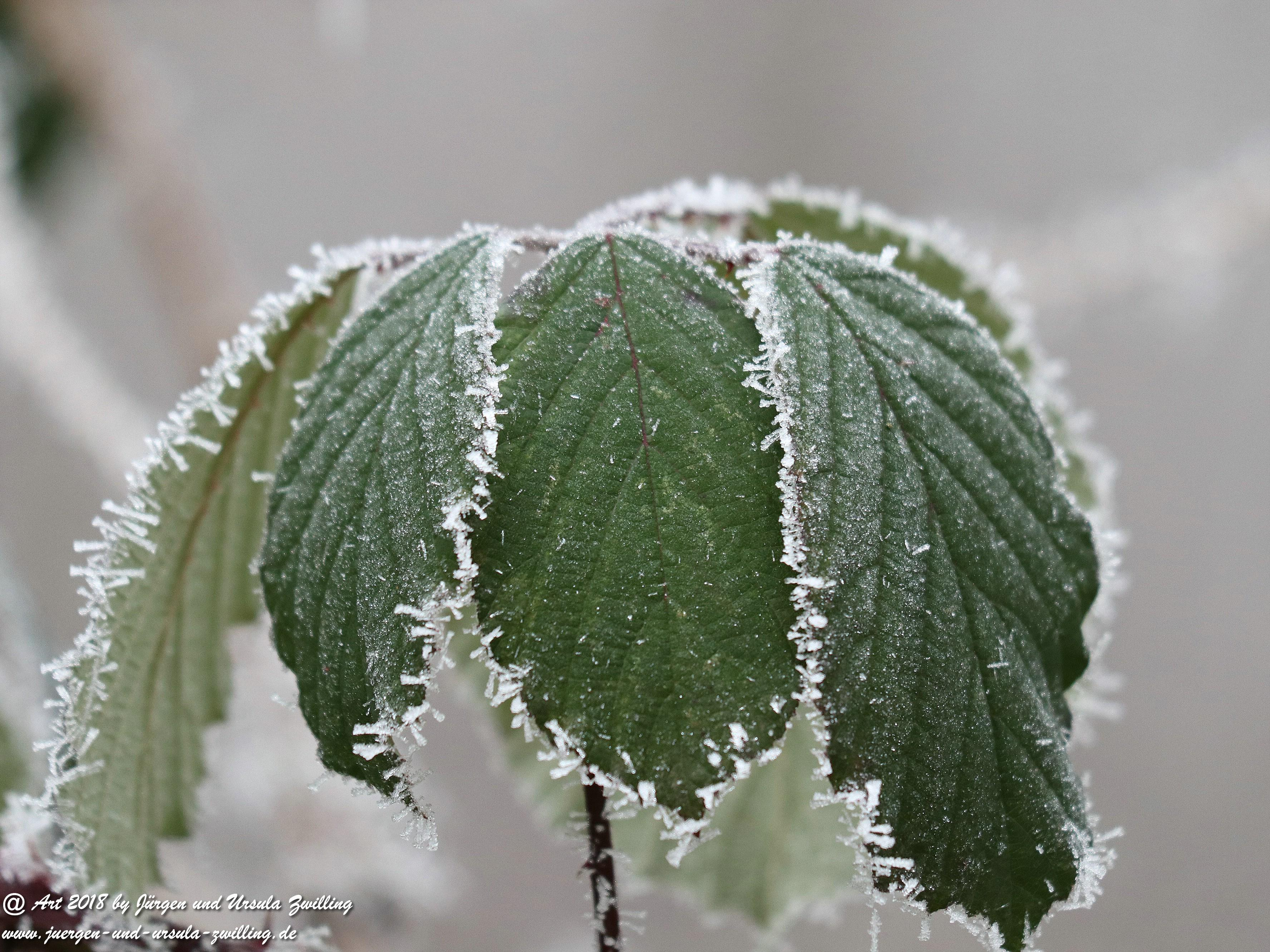 Frostblatt 3