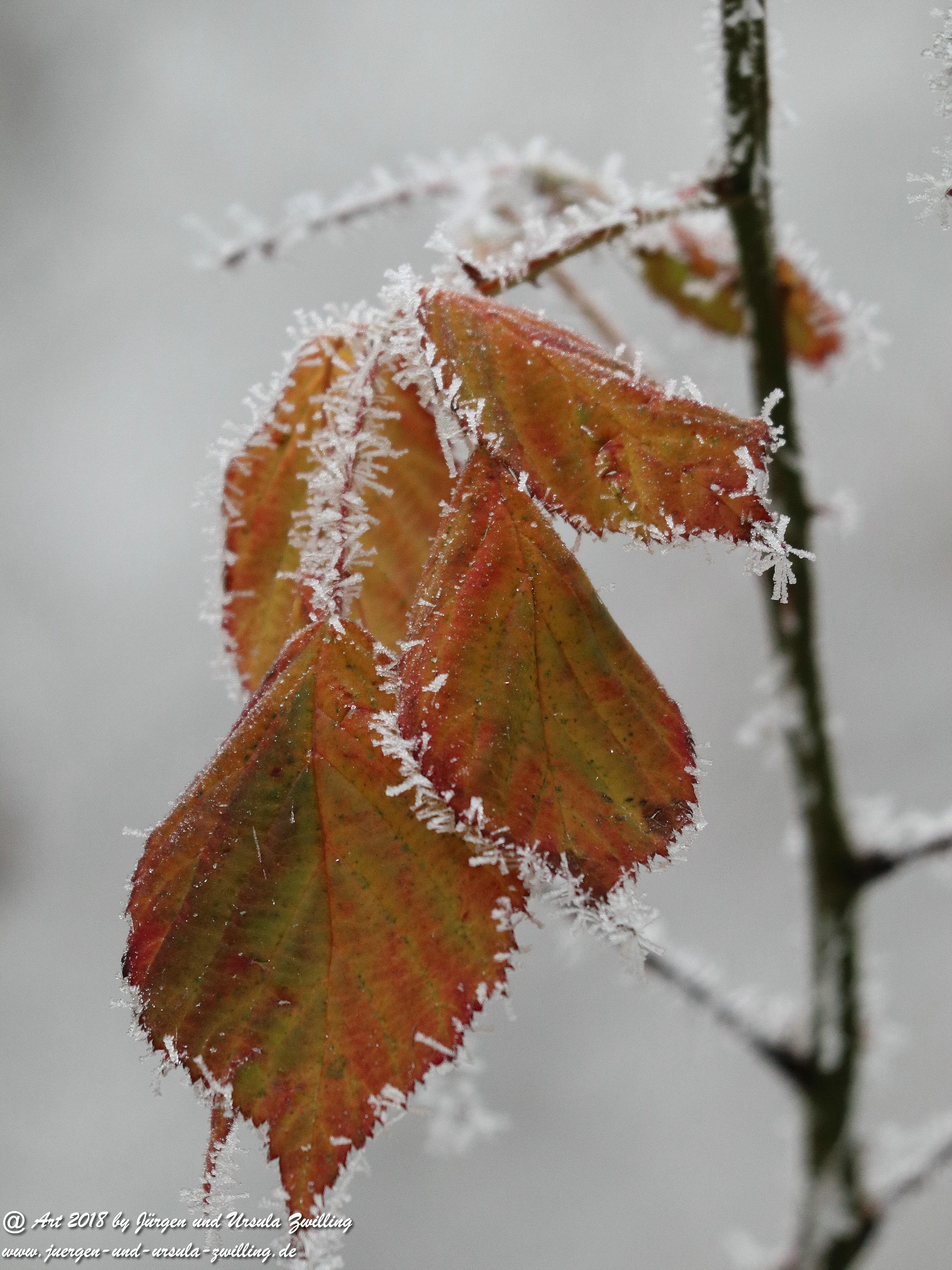 Frostblatt 5