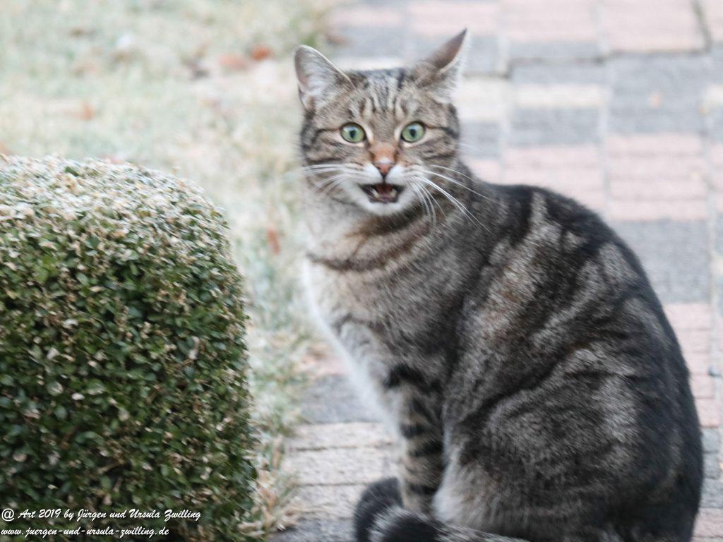 Katze Mimi im Februar 2019
