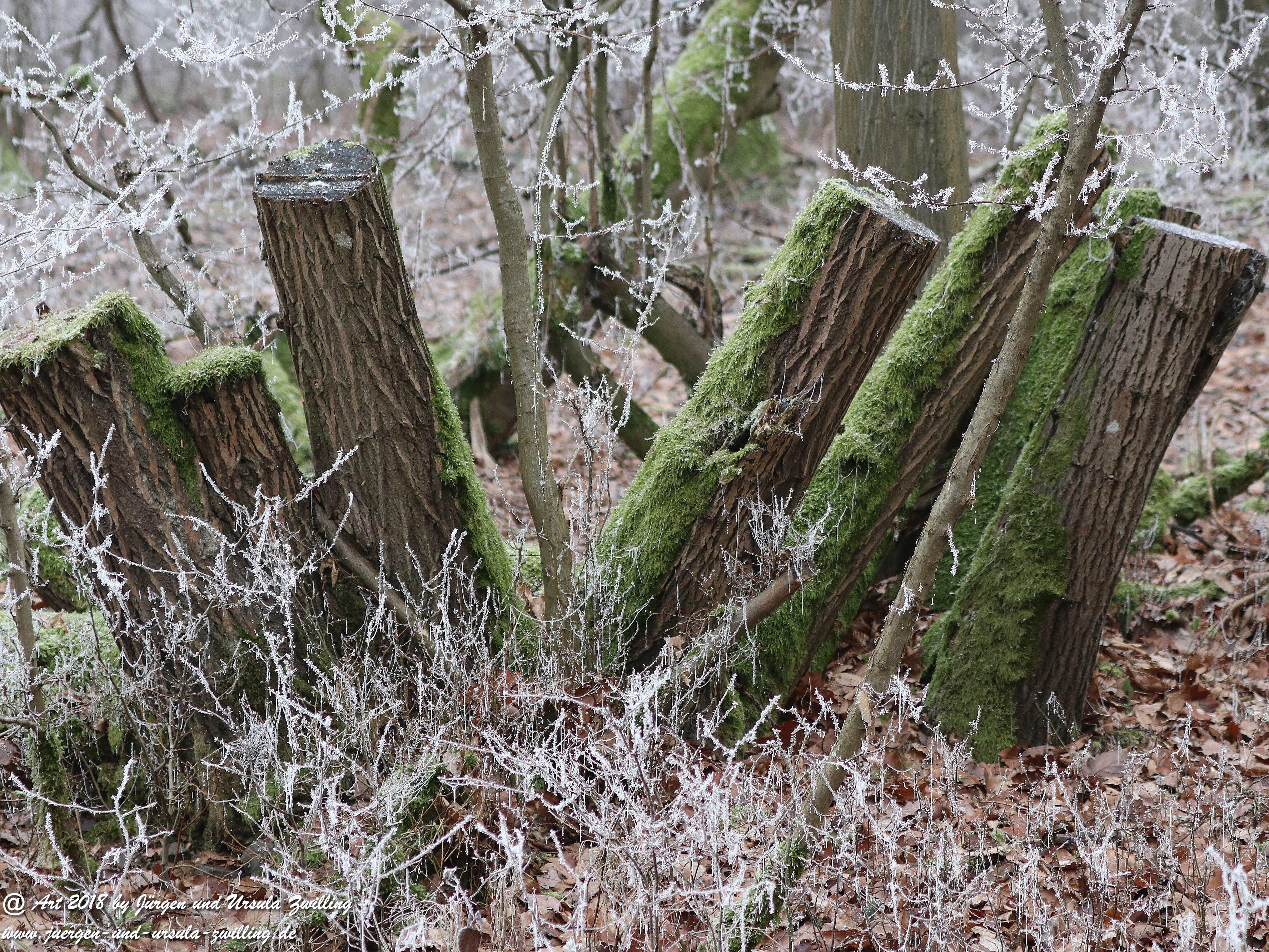 Winterbaumstämme