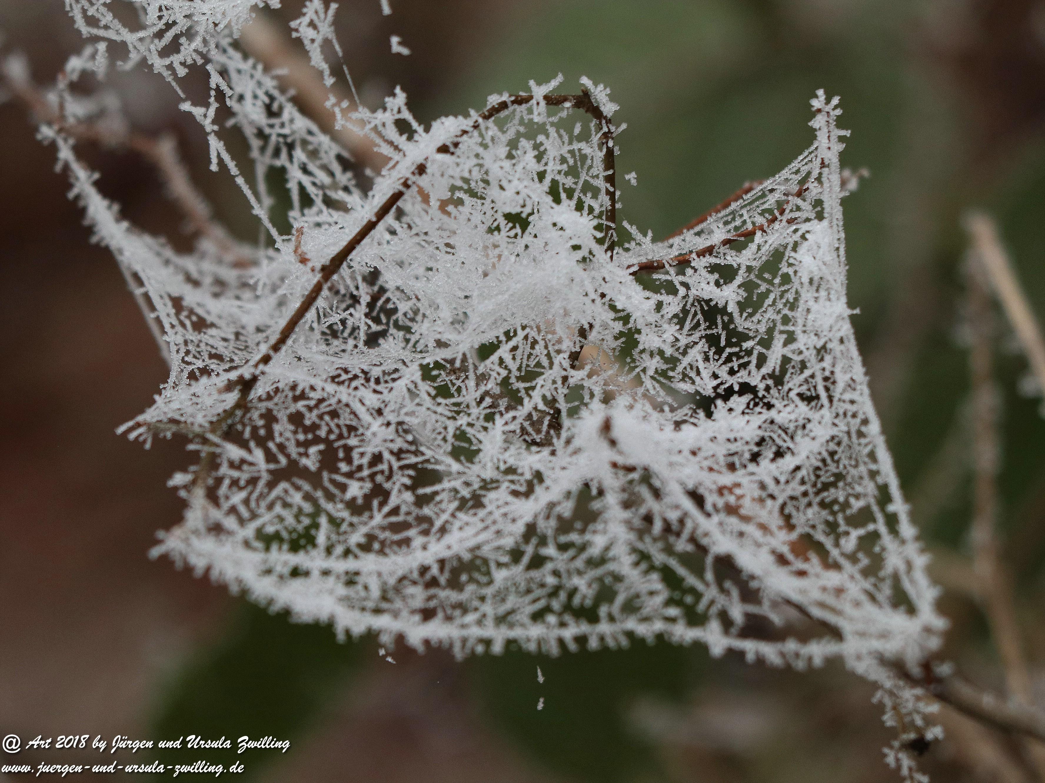 Winterspinnennetz 1