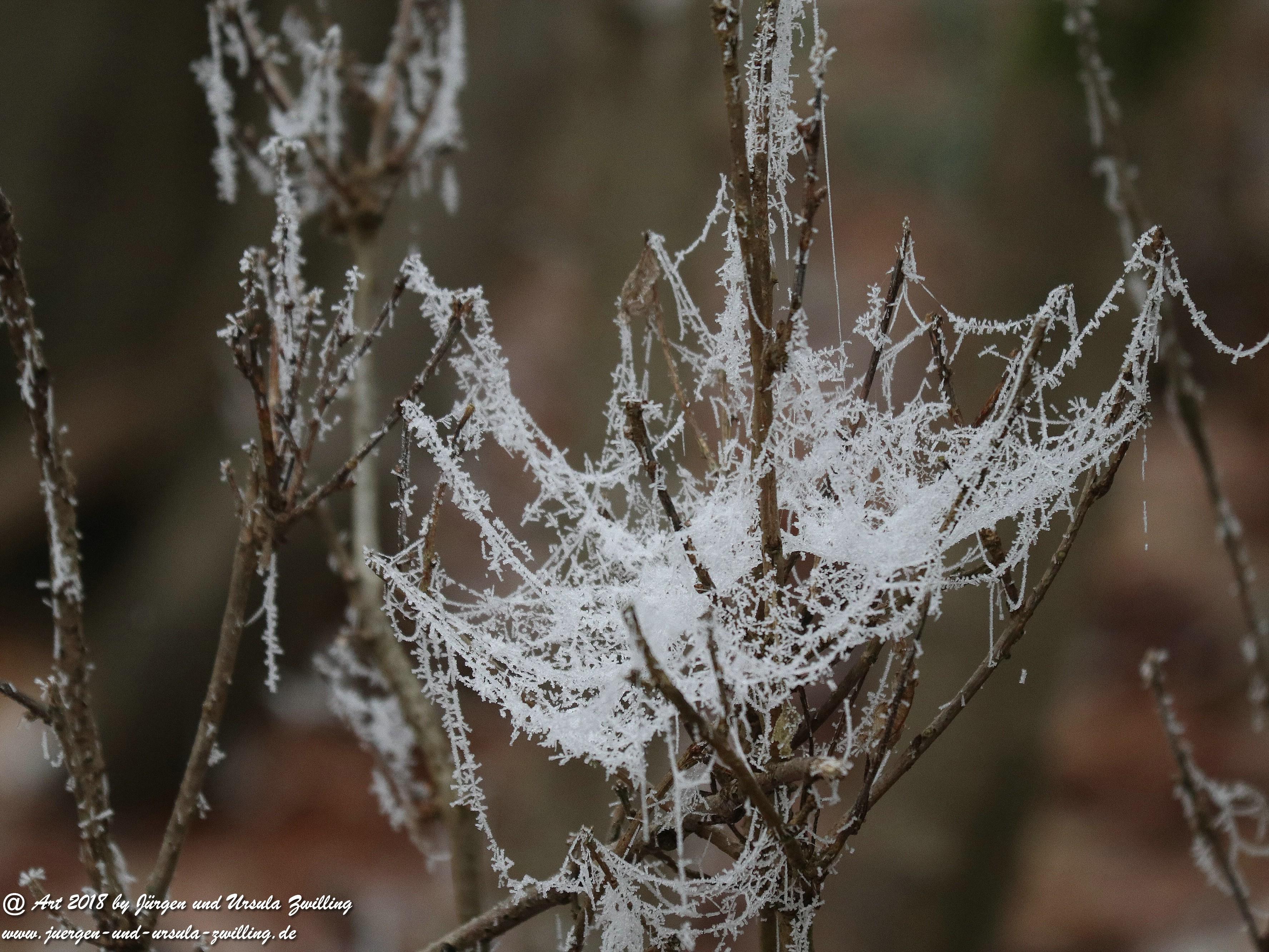 Winterspinnennetz 2