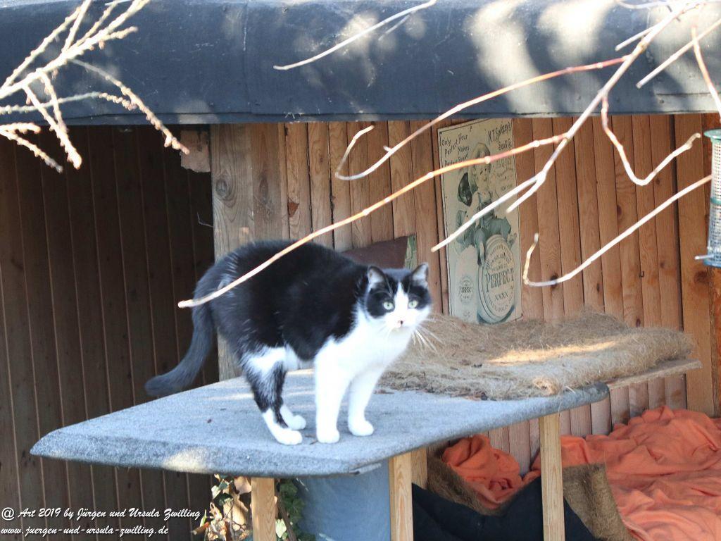 Katzenbesuch bei Katze Mimi auf dem Dach
