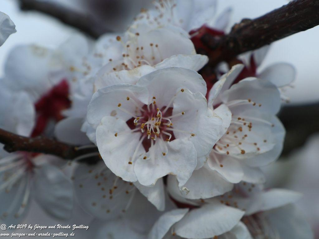 Blütenstart in Rheinhessen
