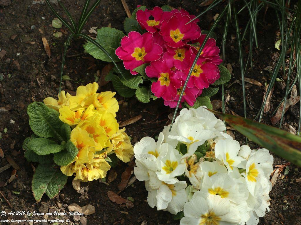 Hyazinthen, Narzisse - Osterglocken, Stiefmütterchen, Primeln