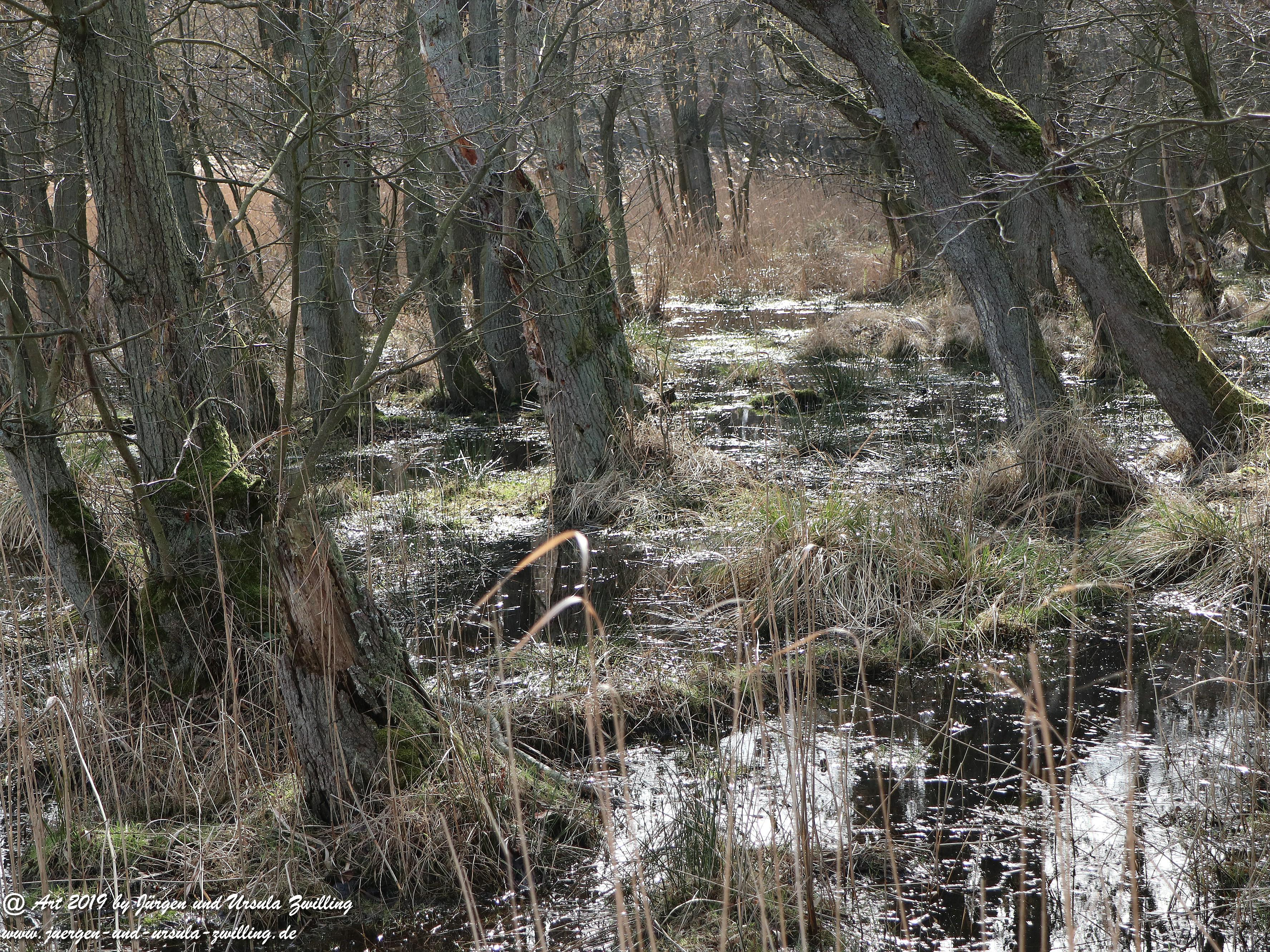 Naturschutz Darßer Ort 4