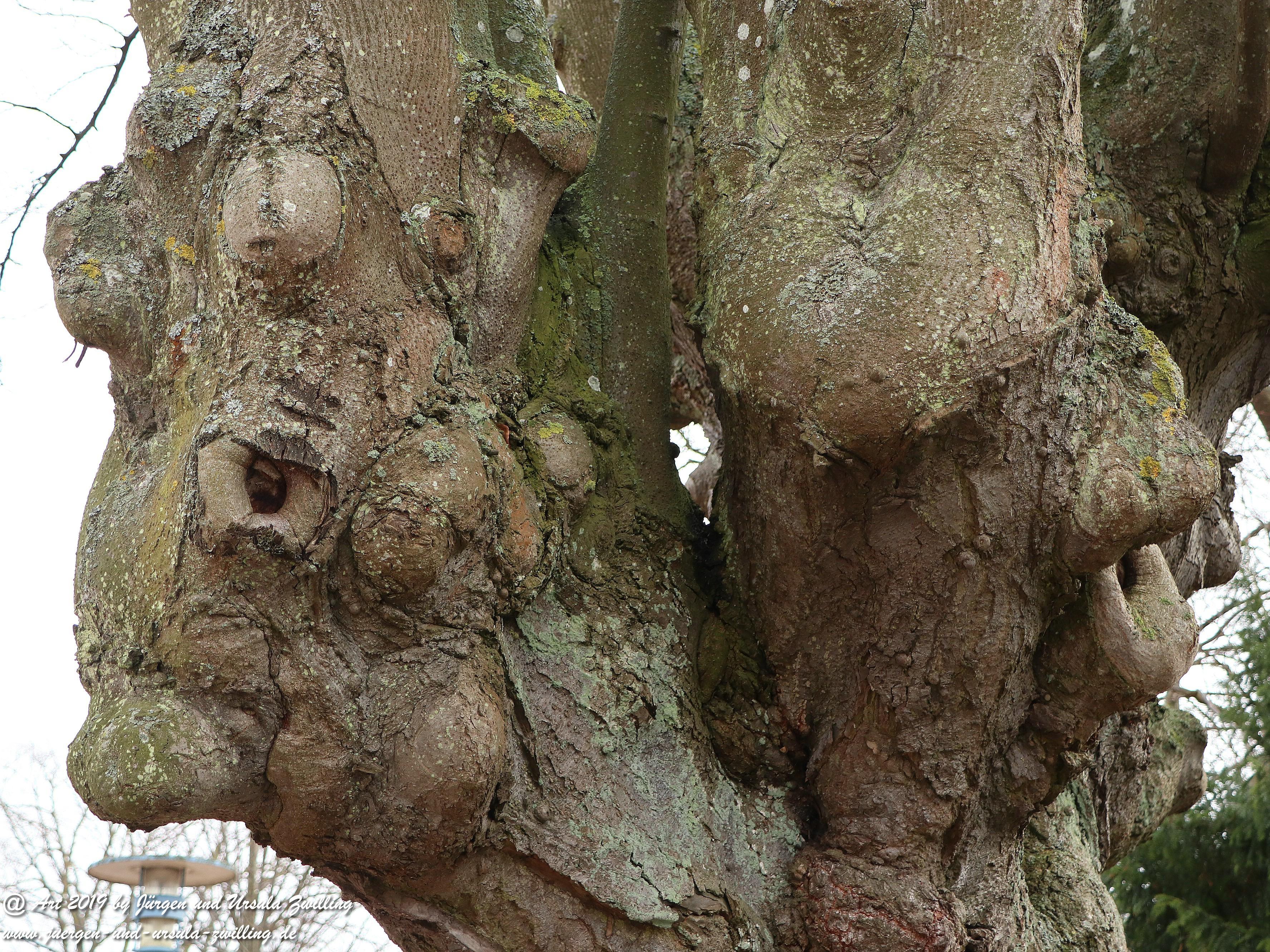 Zwillings - Baum - Gesichter