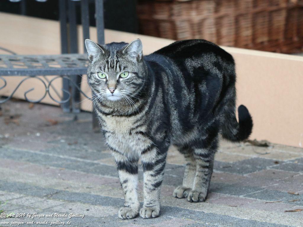 Katze Mimi im April 2019