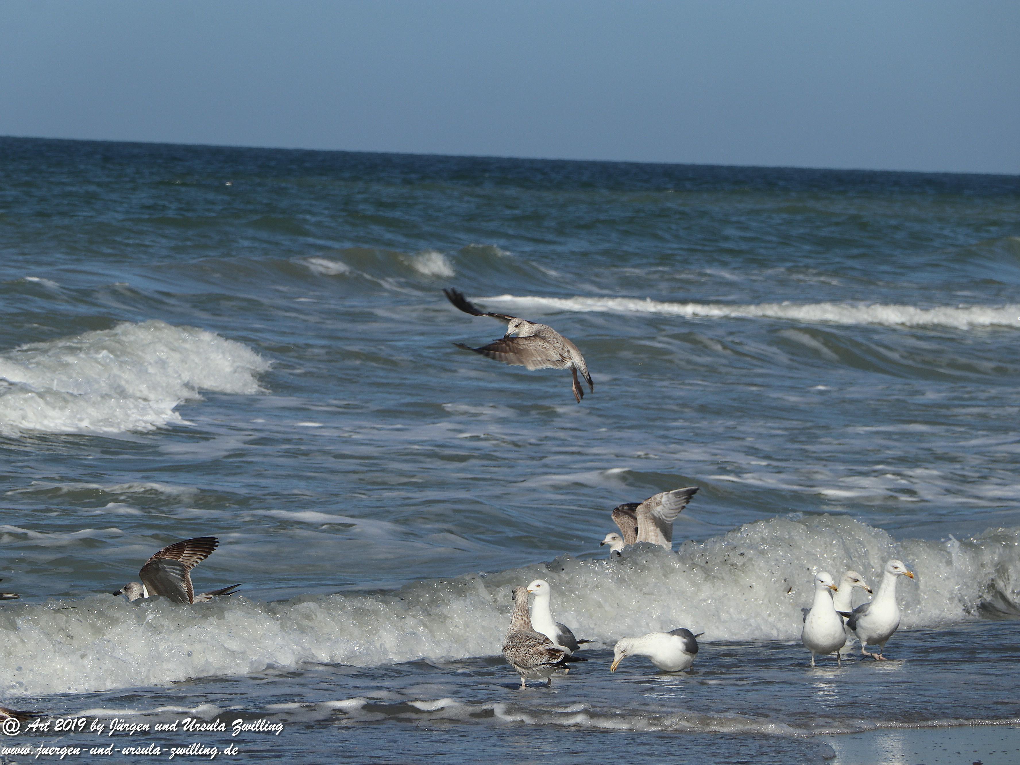 Wellen Ahrenshoop 25