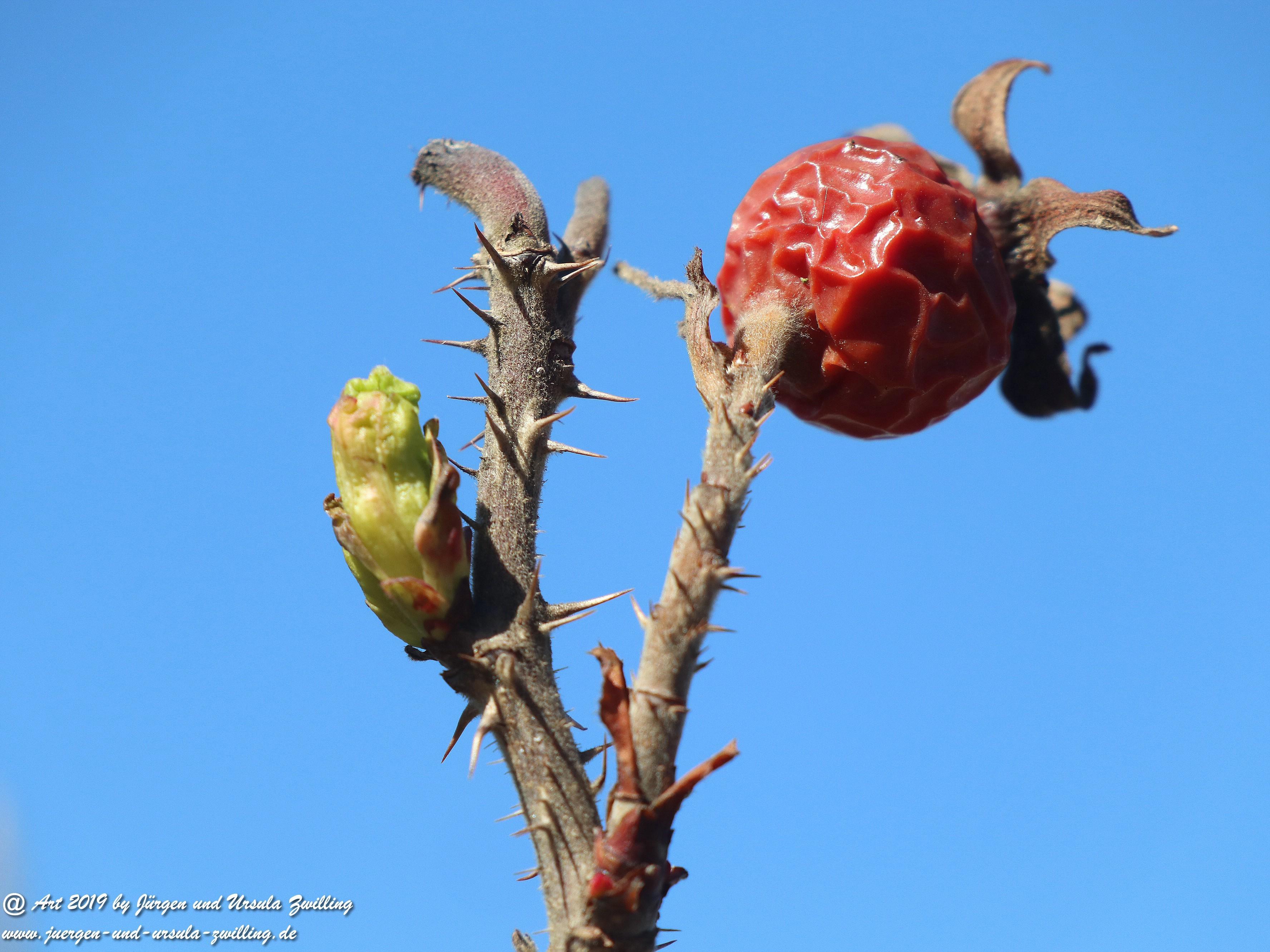 Herbst - Frühling  1