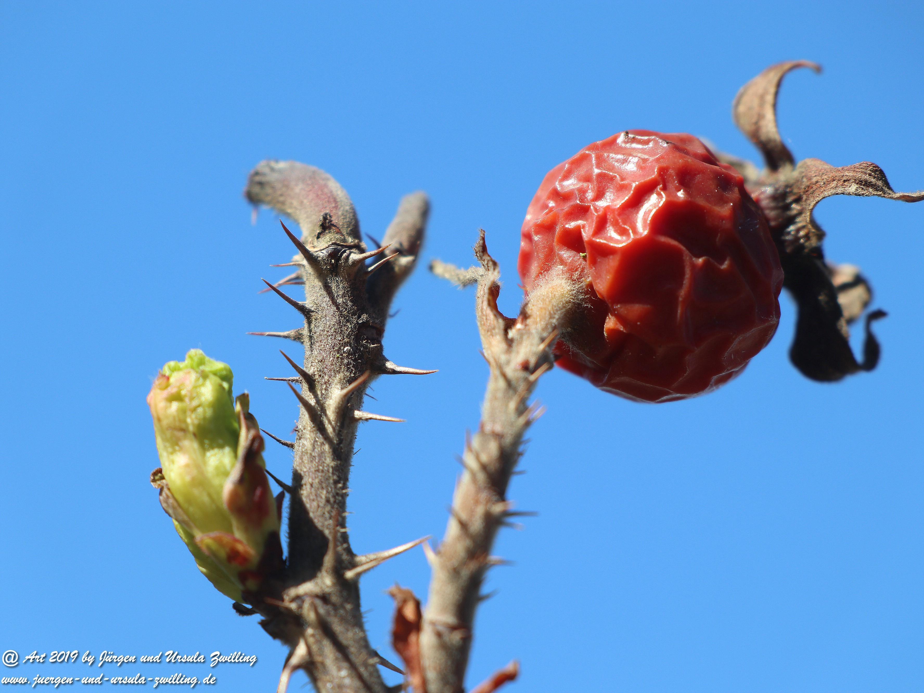 Herbst - Frühling 2