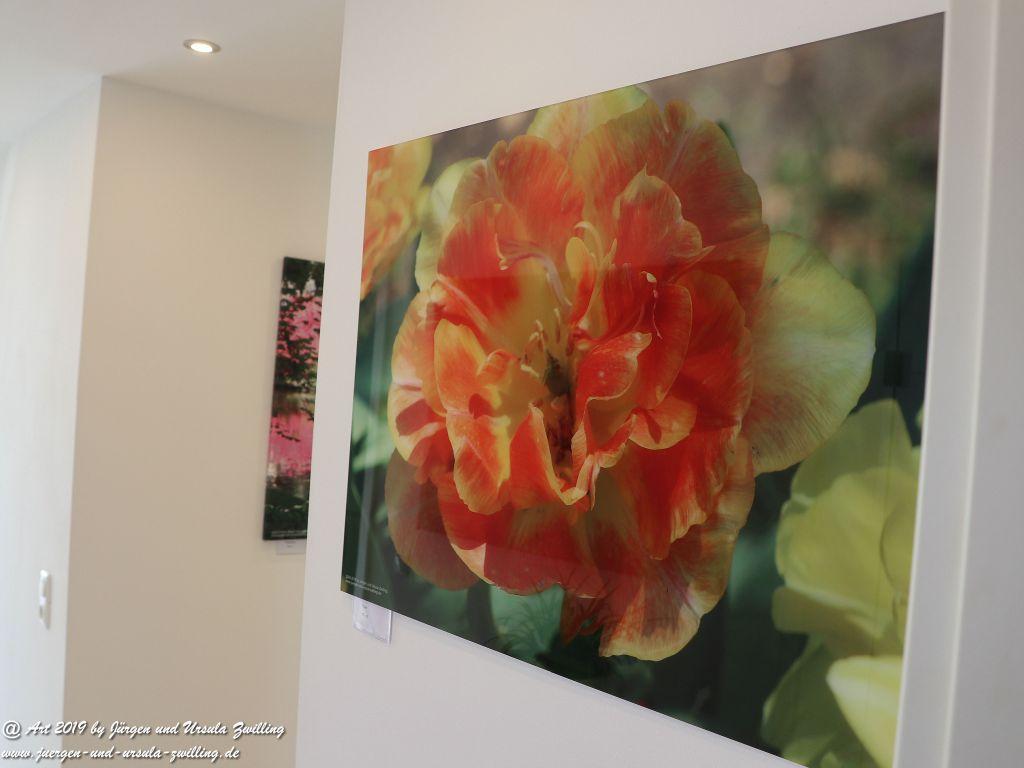 Blick und Einladung in unsere Galerie - Tulpe auf Acrylglas