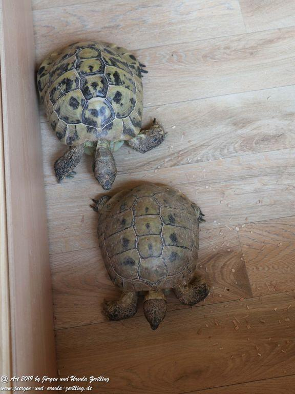 Schildkröten Umzug ins neueSommerquartier