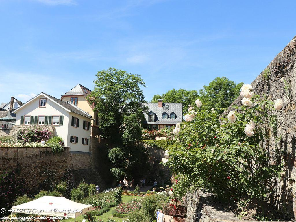 Rosentage in Eltville am Rhein -Rheingau