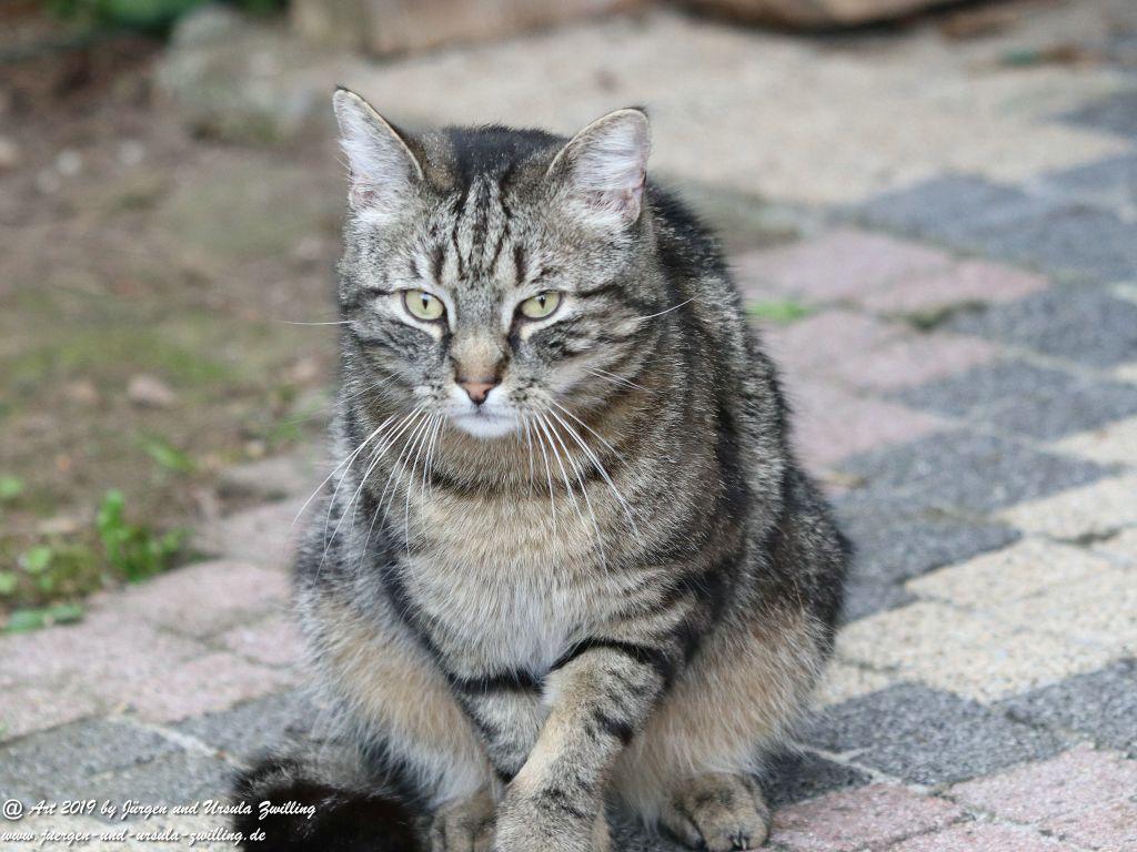 Katze Mimi - Dr. Rodolfo  im Mai 2019