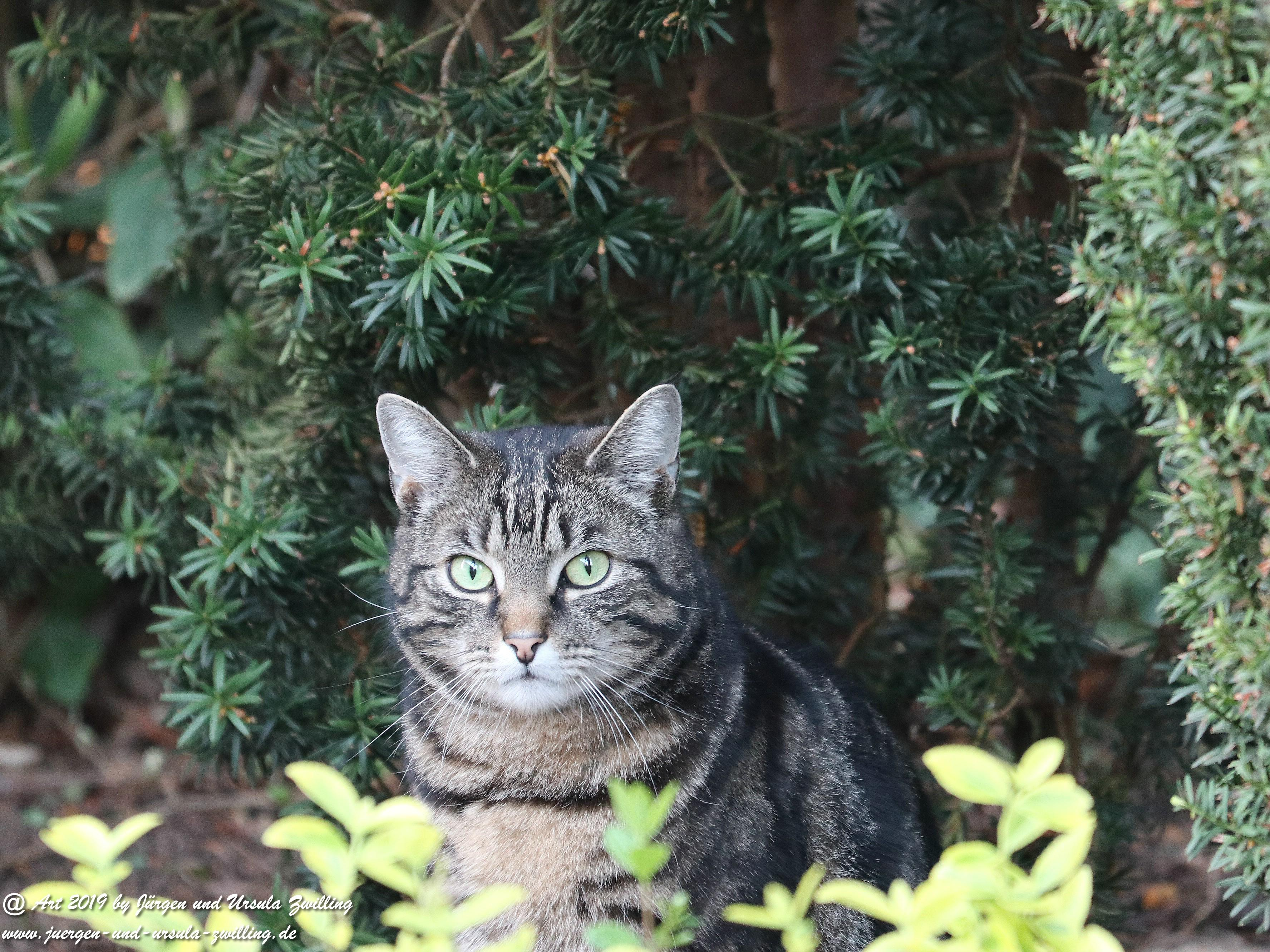 Katze Mimi 1