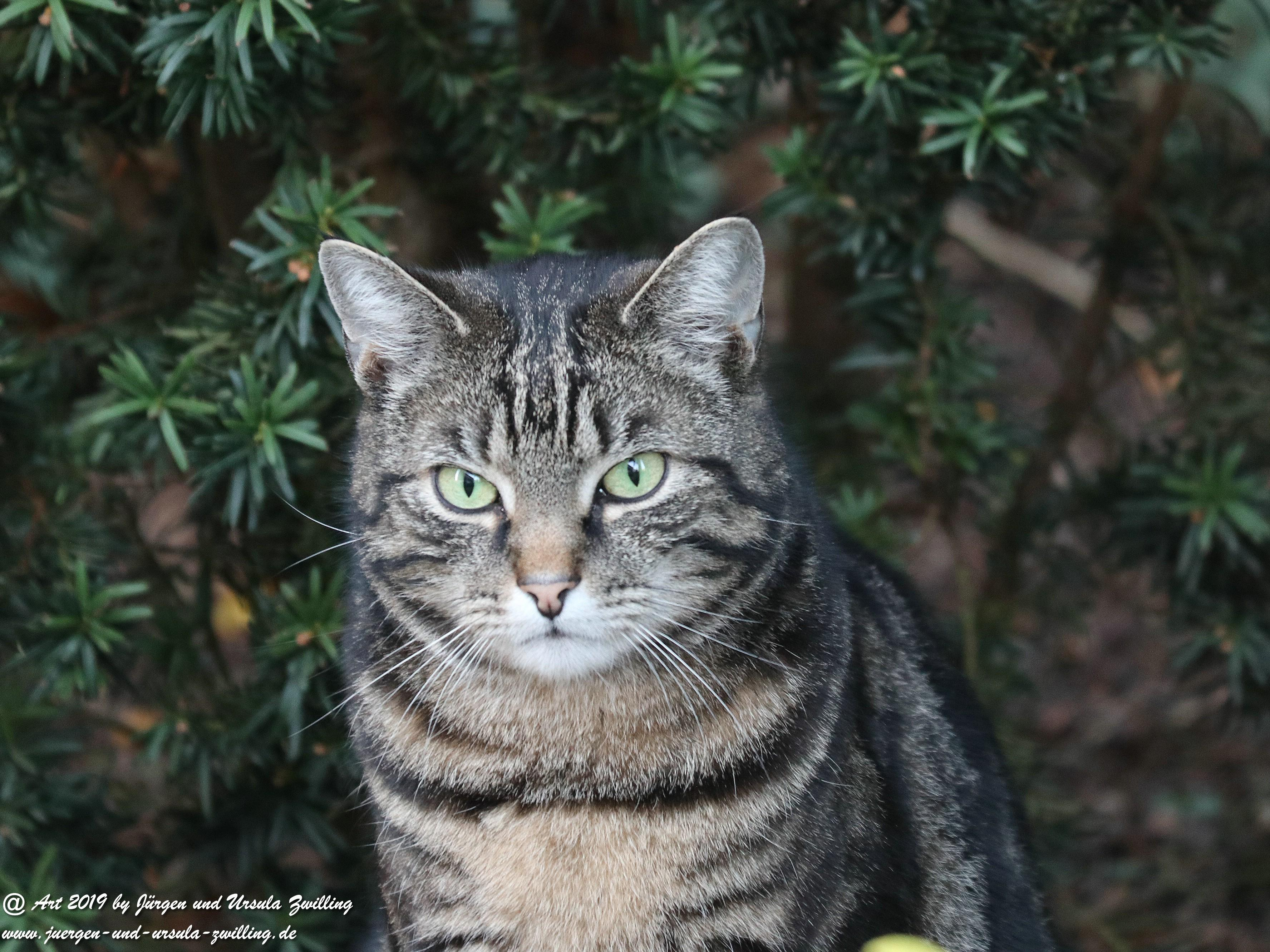 Katze Mimi 2