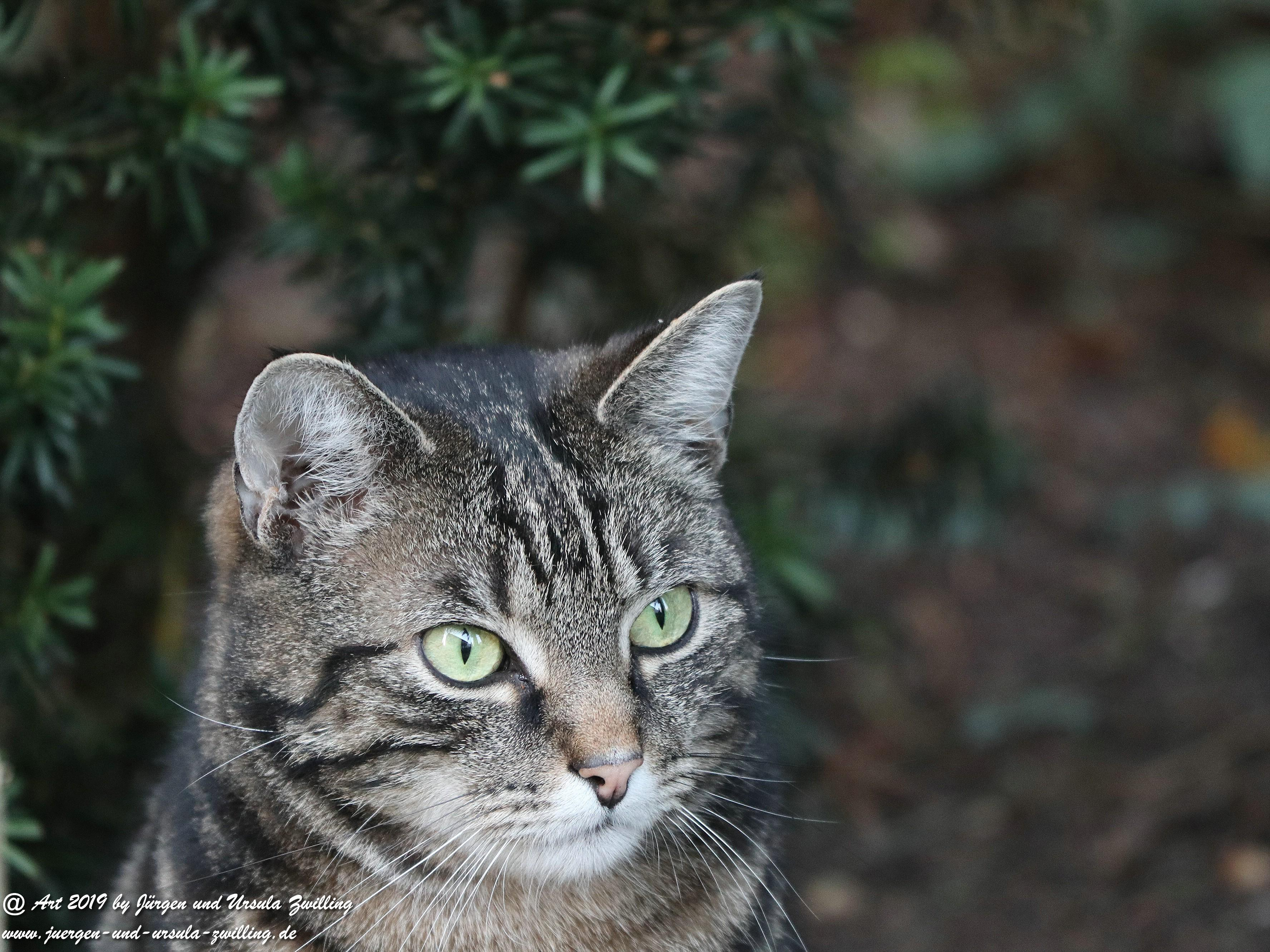 Katze Mimi 3