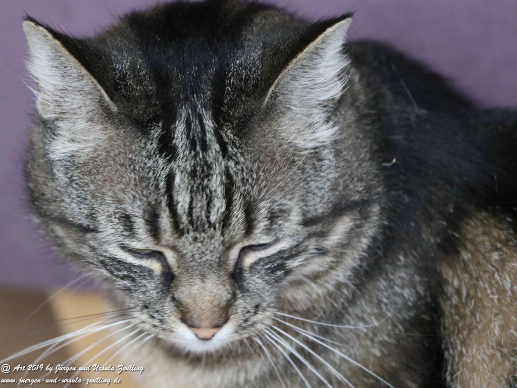 Katze Mimi - Dr. Rodolfo im Juni 2019