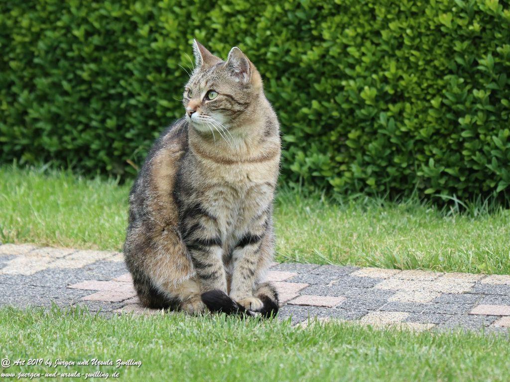 Katze Mimi - Dr. Rodolfo