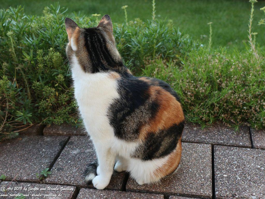 Chiemsee Katze - Bernau Chiemsee -Bayern