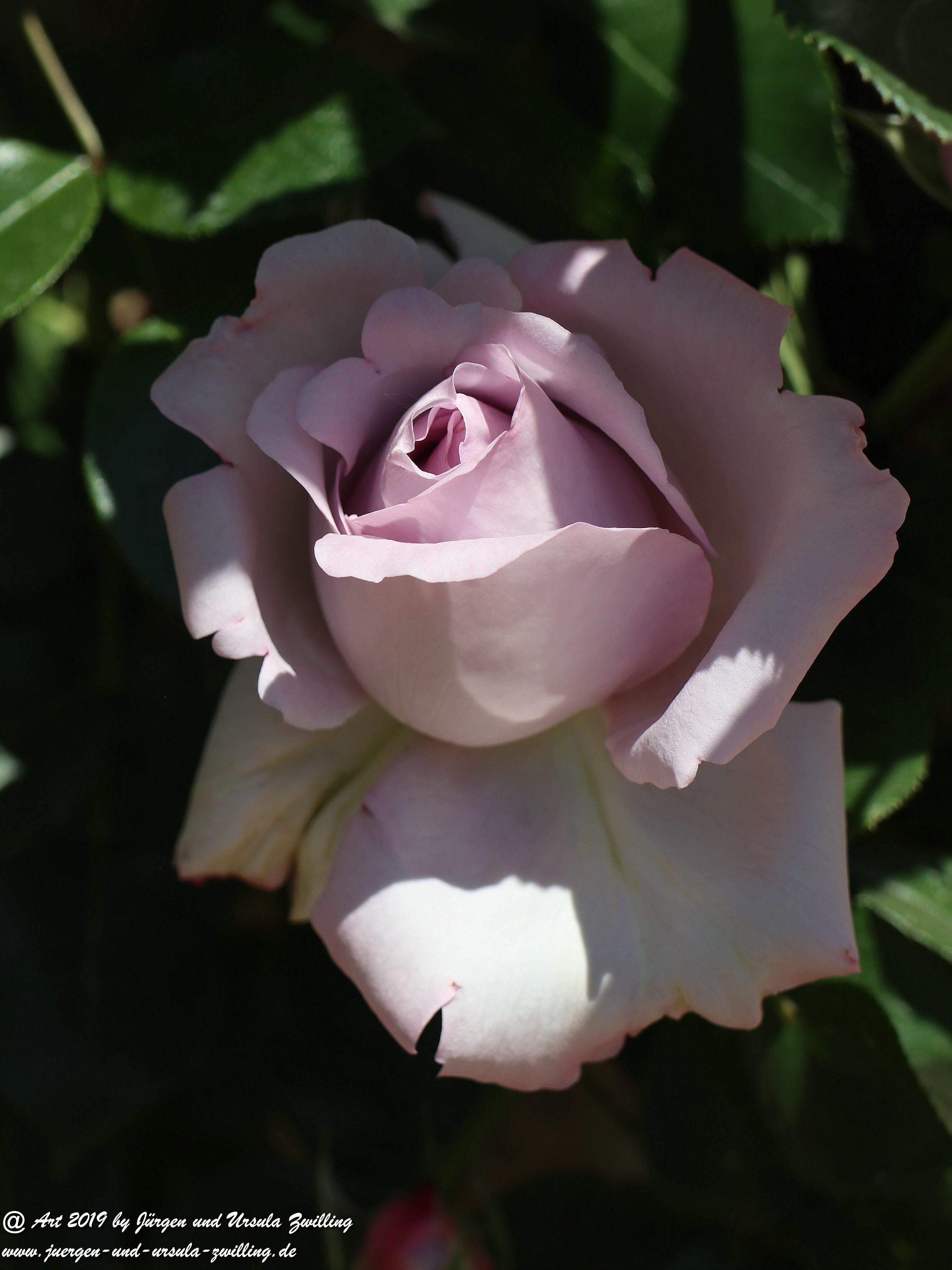 Rosen 14