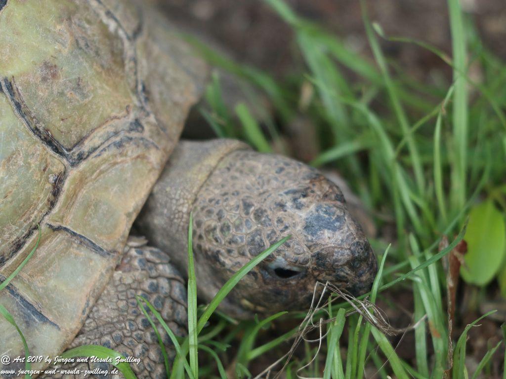 Schildkröten - Mainz -Rheinhessen
