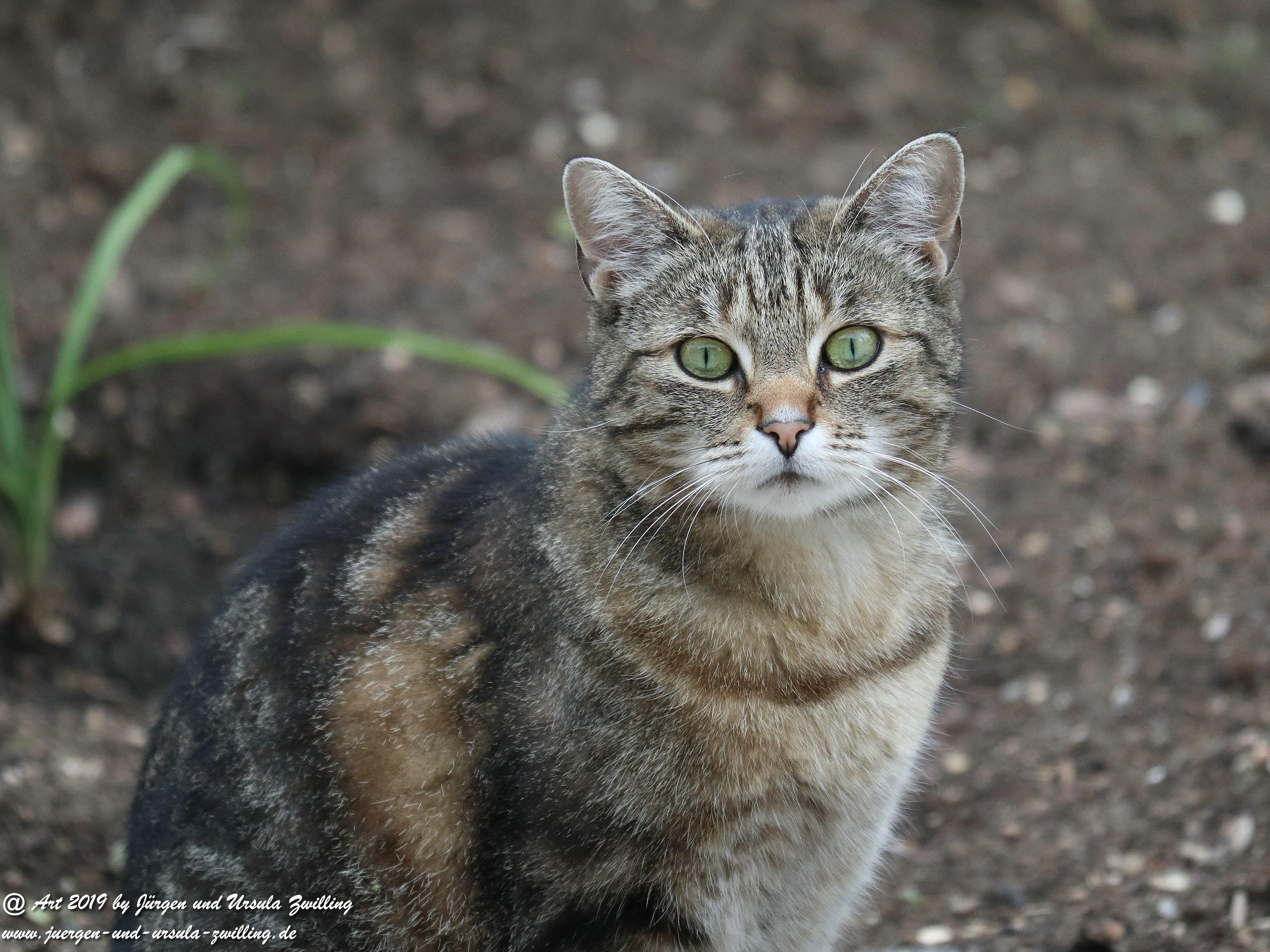 Katze Mimi 4