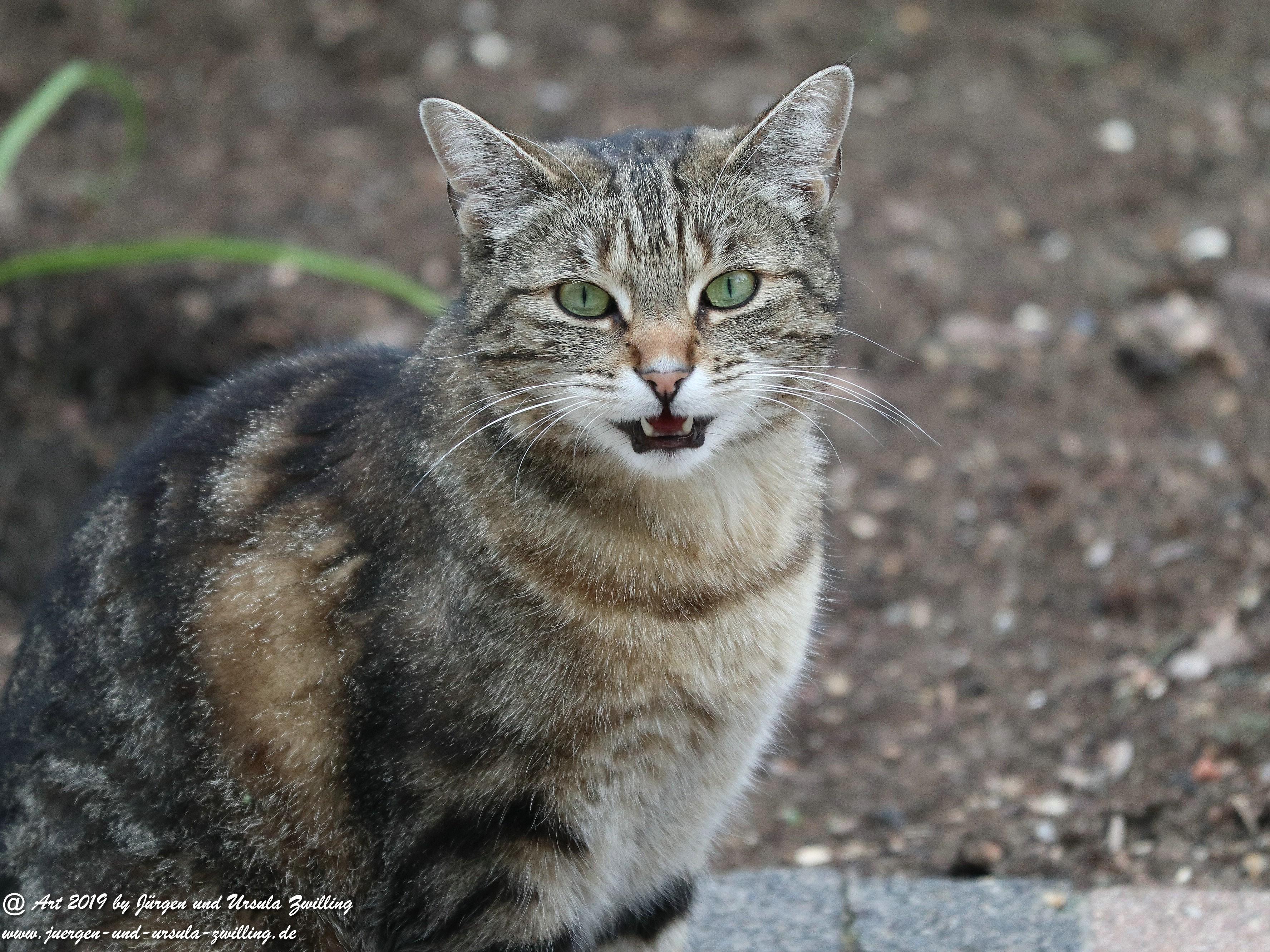 Katze Mimi 5