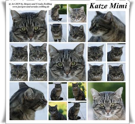 Katze Mimi im Juli 2019 #drrodolfo #katzemimi