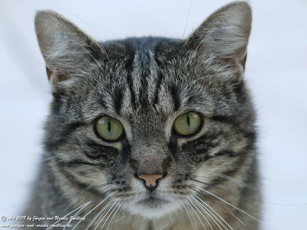 Katze Mimi #drrodolfo #katzemimi