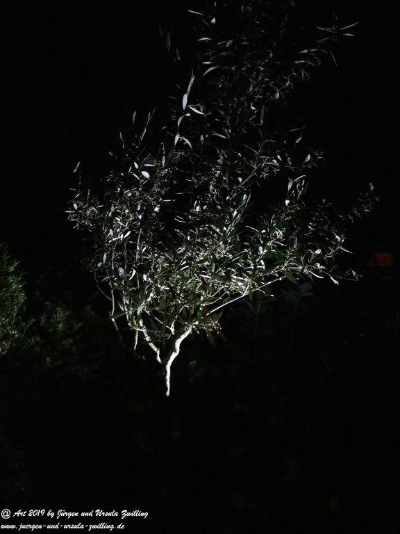 Garten in der Nacht