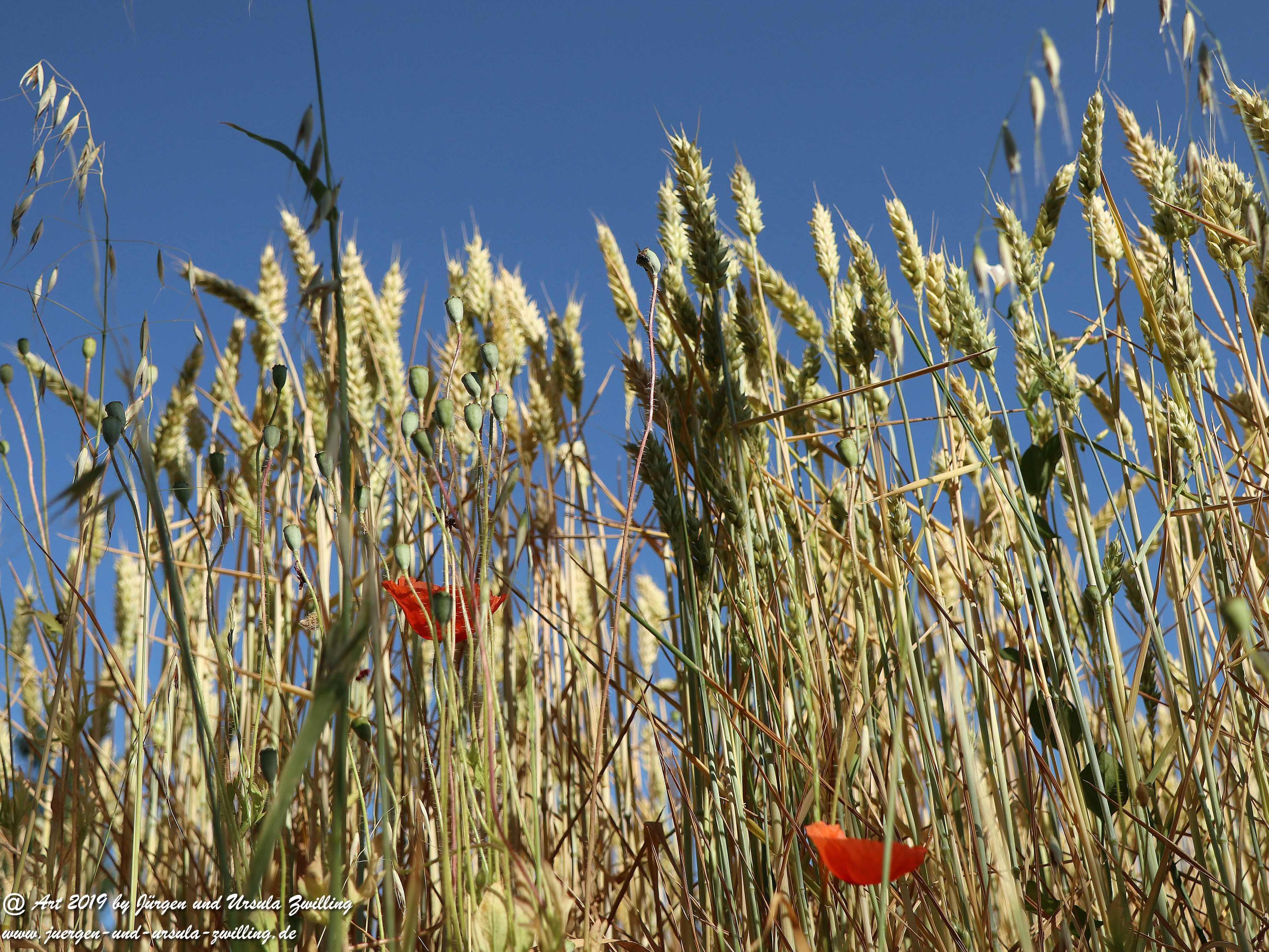 Getreide 2