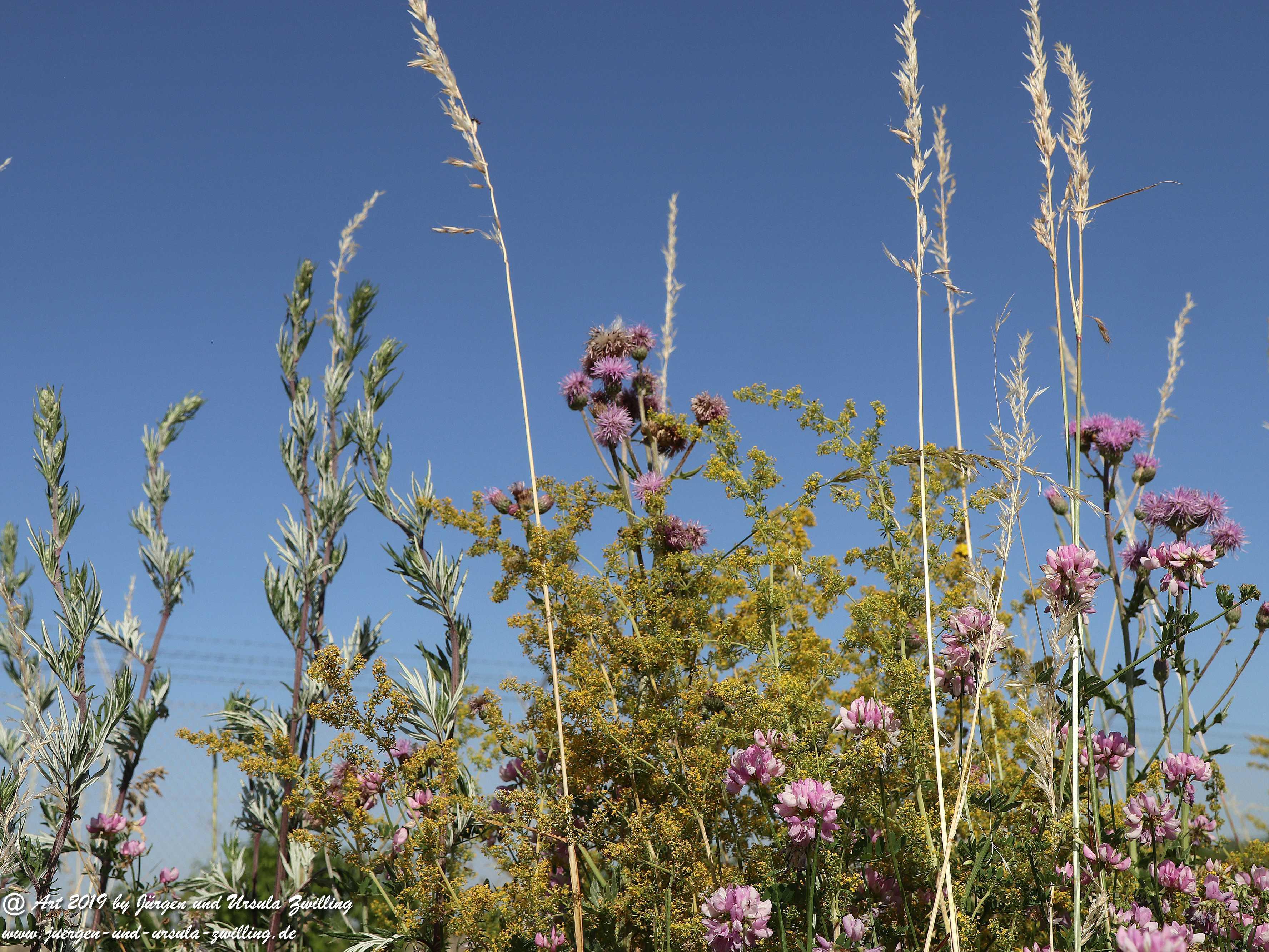 Sommerblumen 3