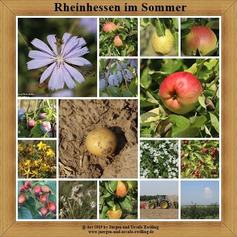 Rheinhessen im Sommer