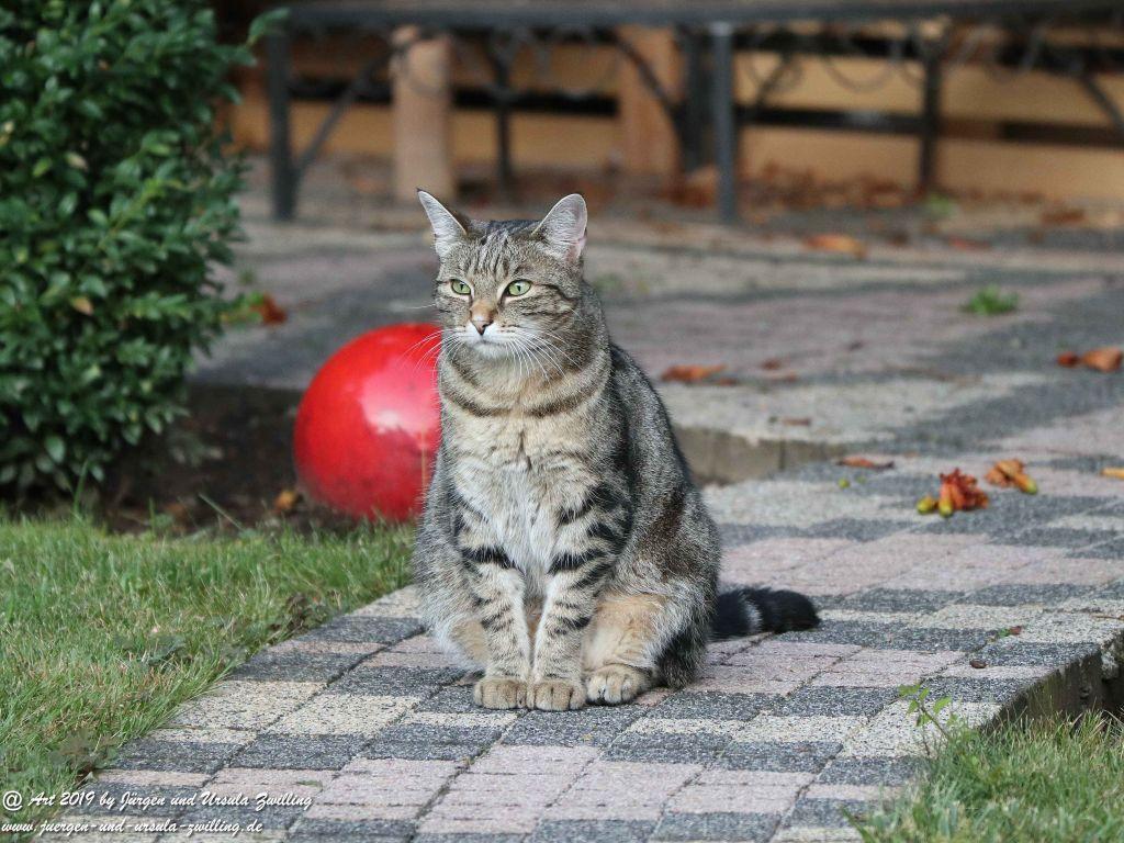 Katze Mimi im August 2019 #drrodolfo #katzemimi