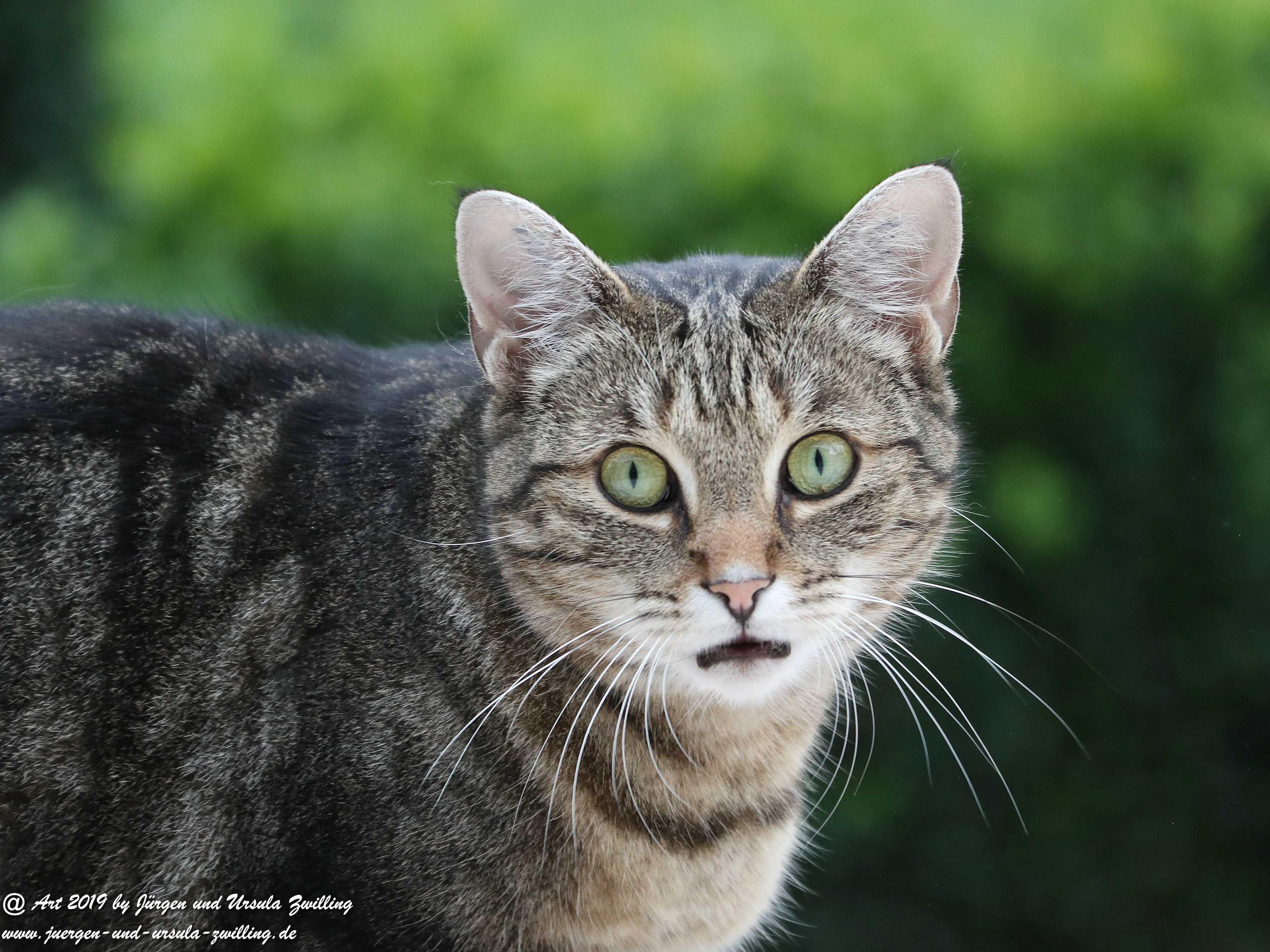 Katze Mimi 6