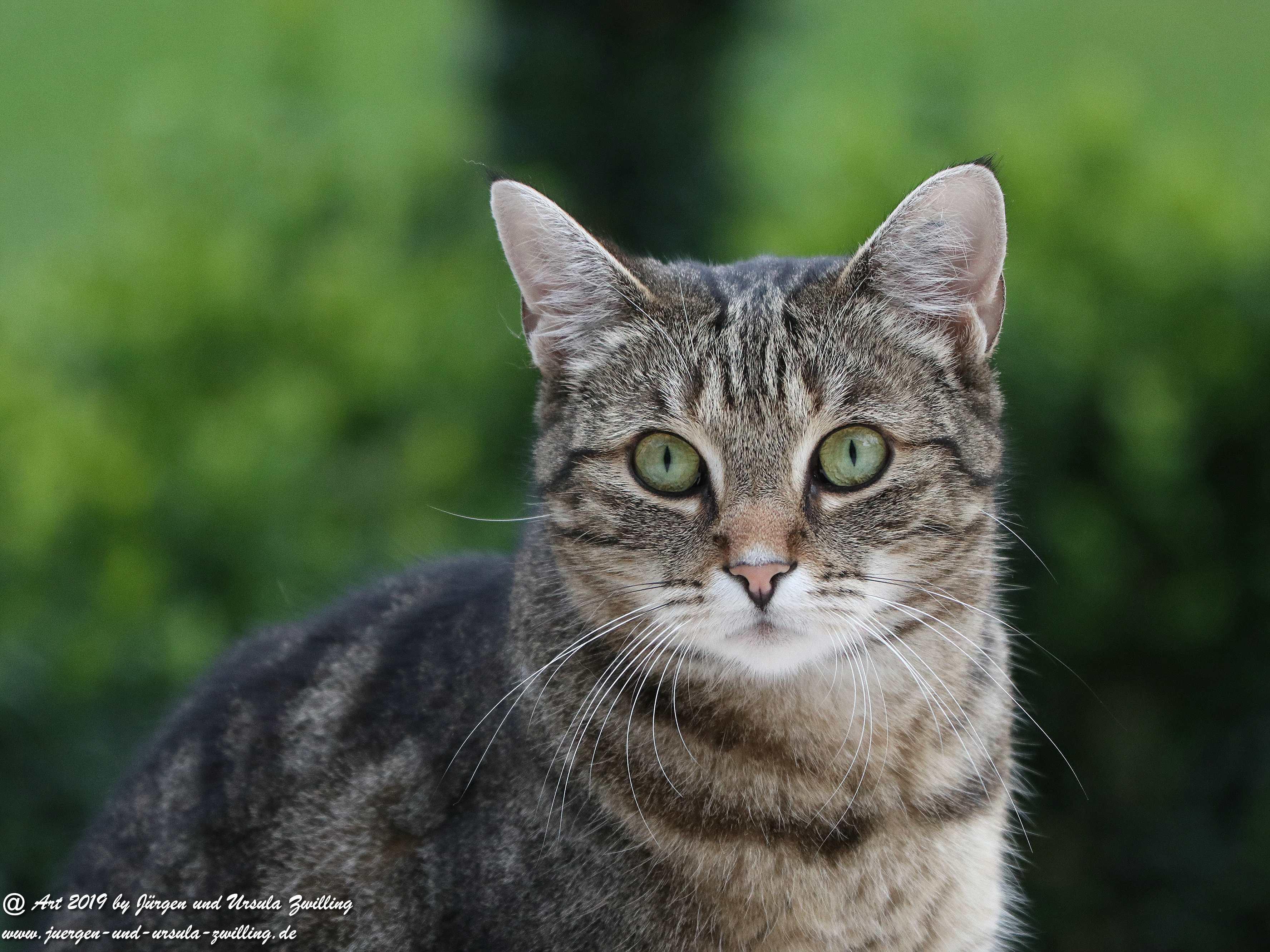 Katze Mimi 7